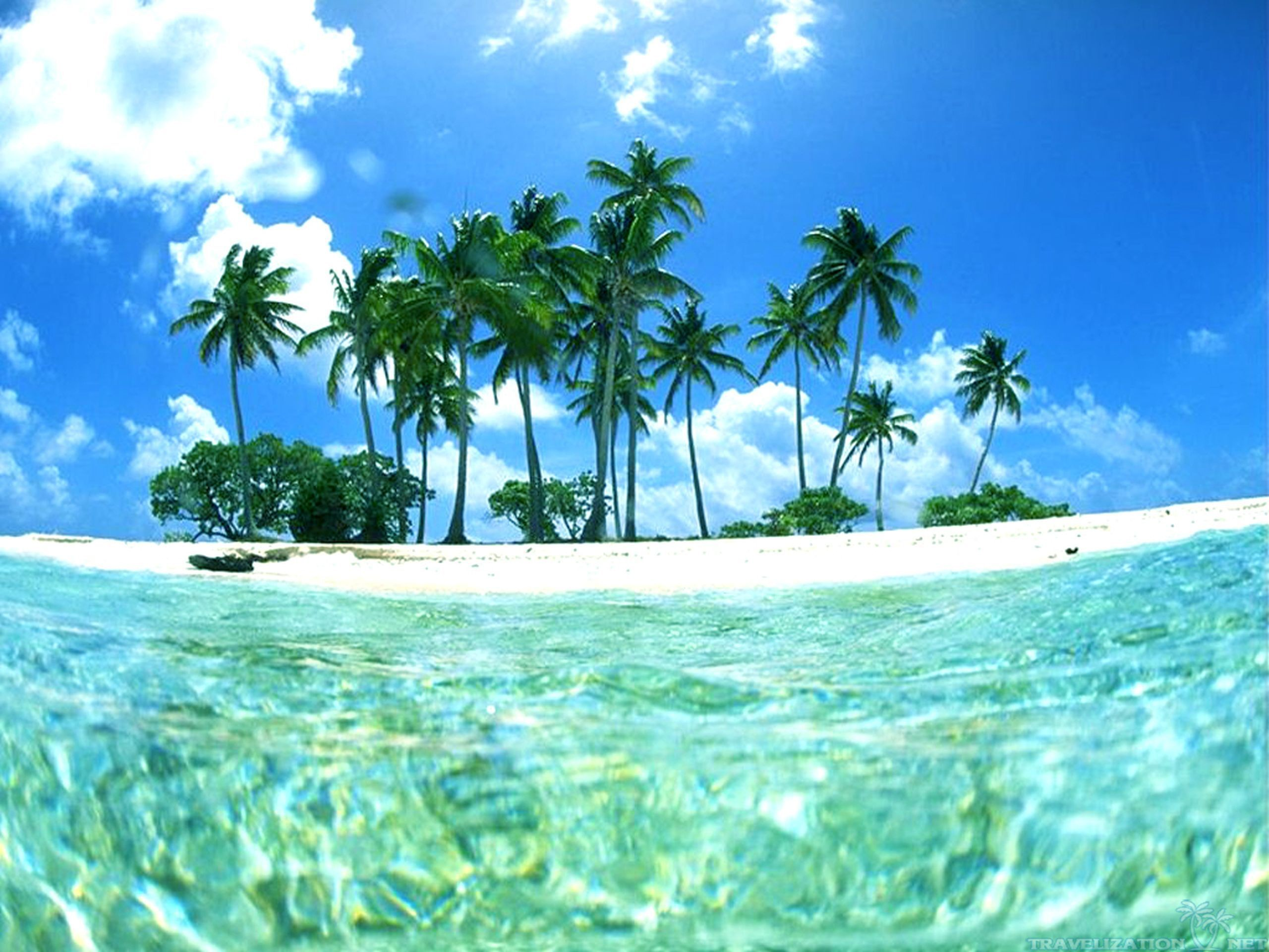 Tropical Beaches Hd Background Wallpaper 51 HD Wallpapers #7279