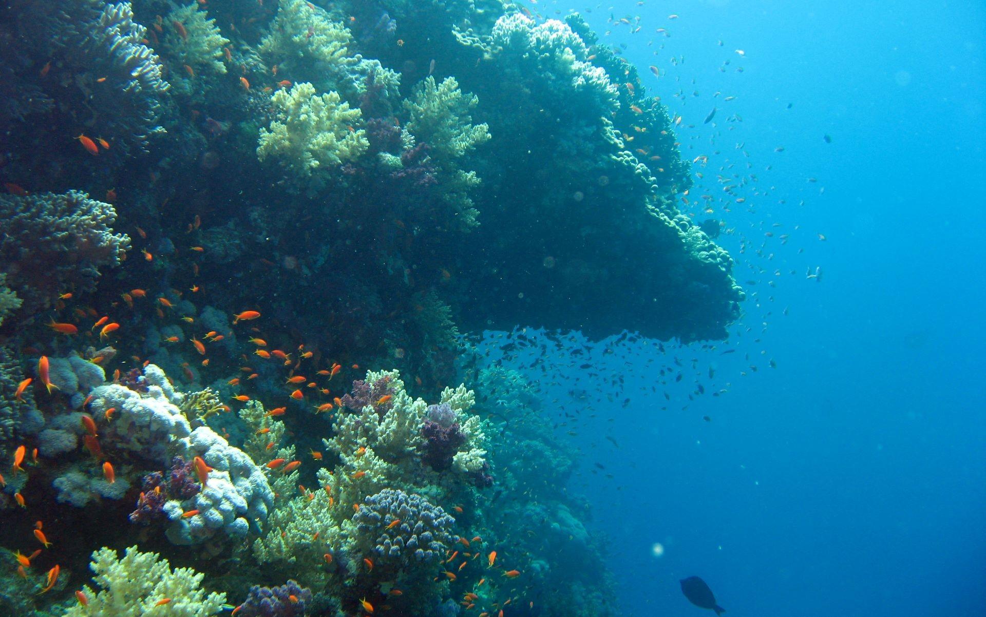 Underwater Wallpaper, ocean wallpaper, marine life on Elphinstone #8017