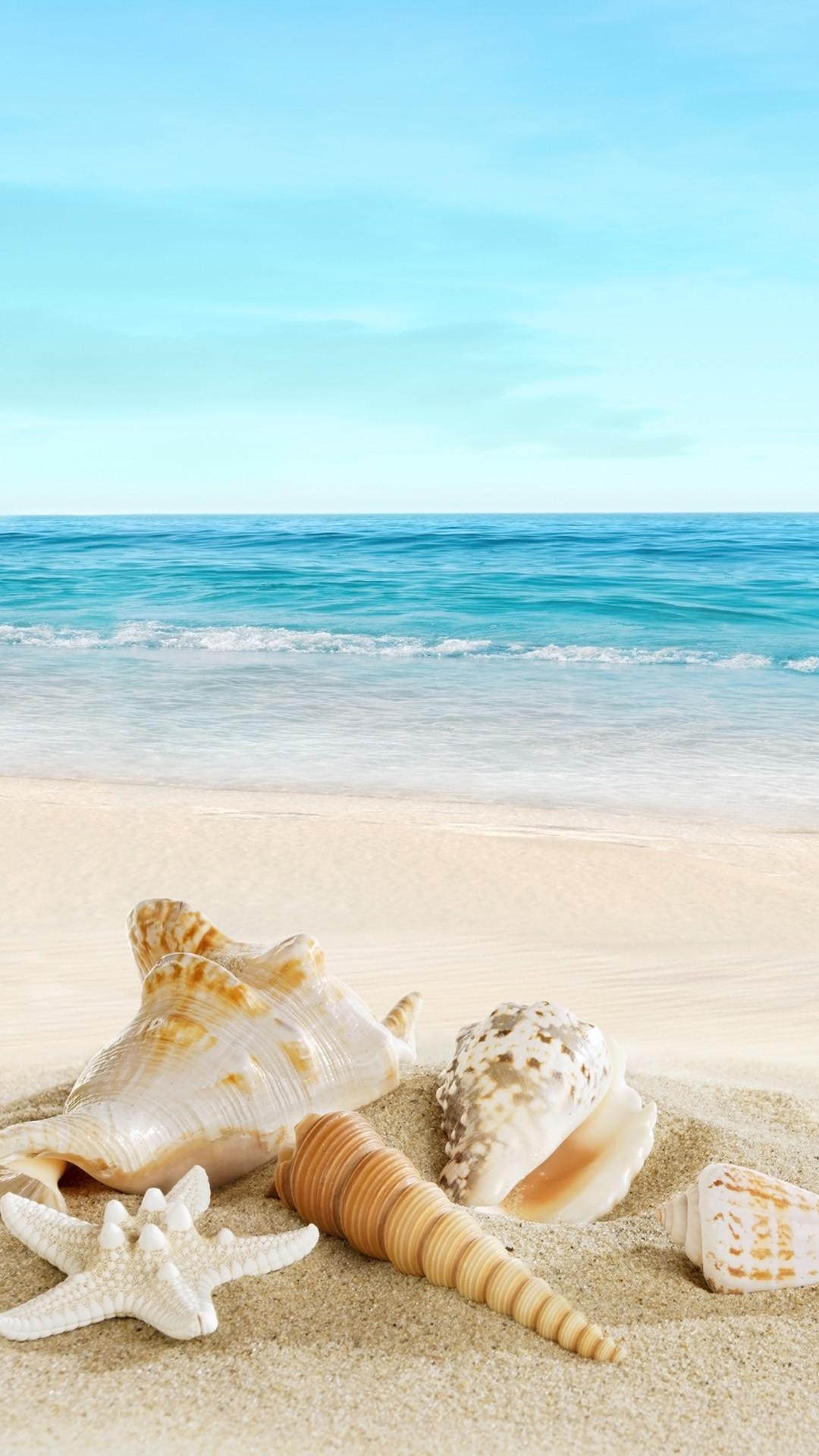Nature Sunny Sea Shell Beach iPhone 6 wallpaper
