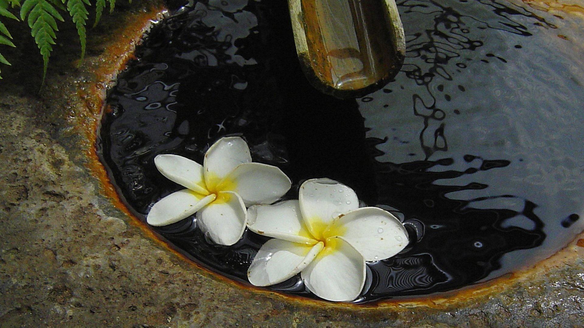 Zen Tag – Plumeria Japanese Zen Garden Hawaii Floating Flowers Hawaiian  Peace Water Frangipani Feng Shui
