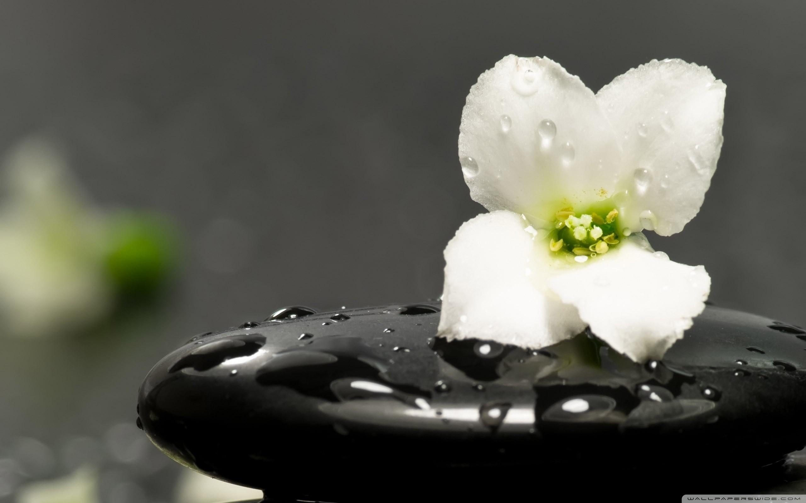 zen   zen_stones_and_flower-wallpaper-2560×1600