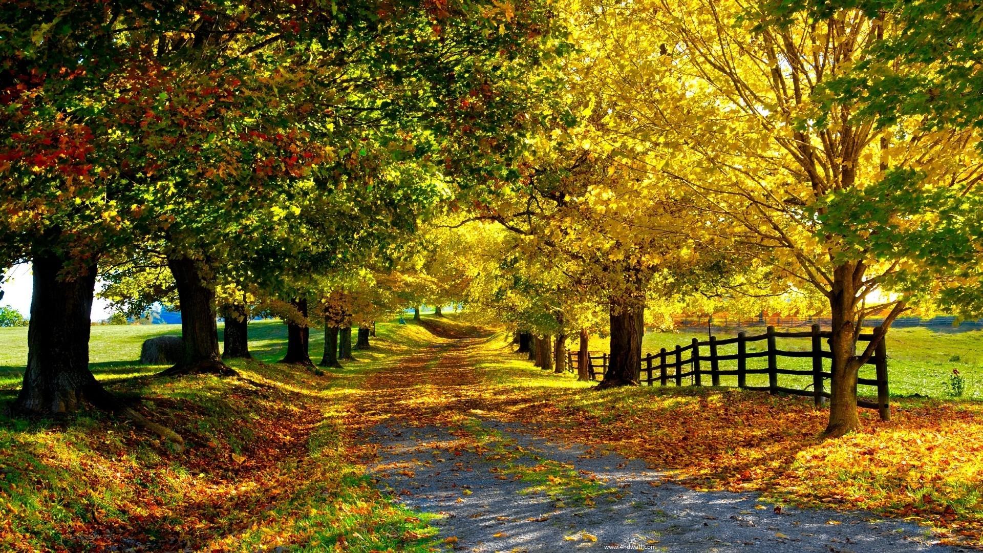 Free Seasons Wallpaper   Desktop Image
