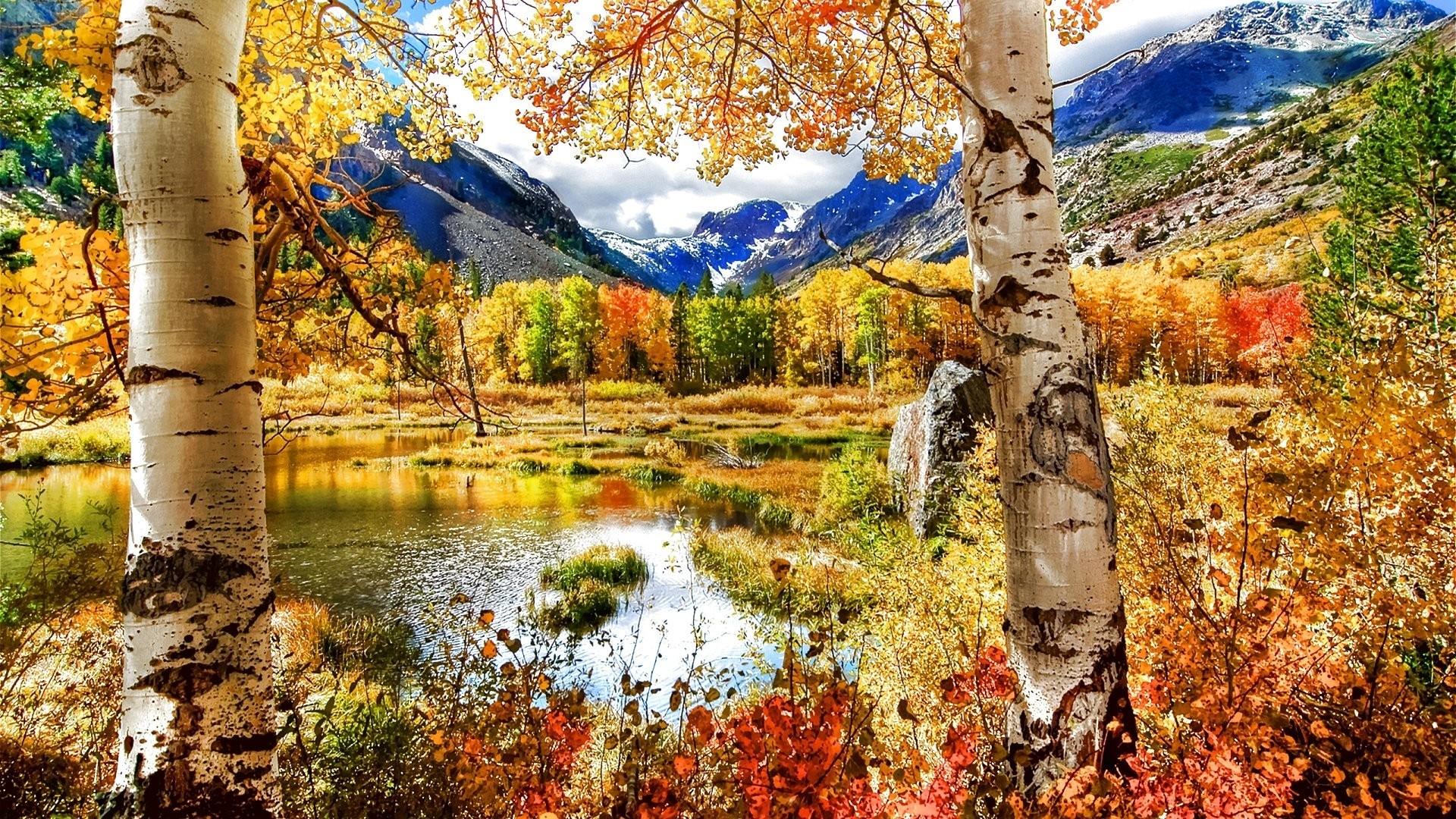 Seasons Tag – Tree Fall Season Seasons Landscape Leaf Autumn Color Forest  Leaves Nature Wallpaper Hd