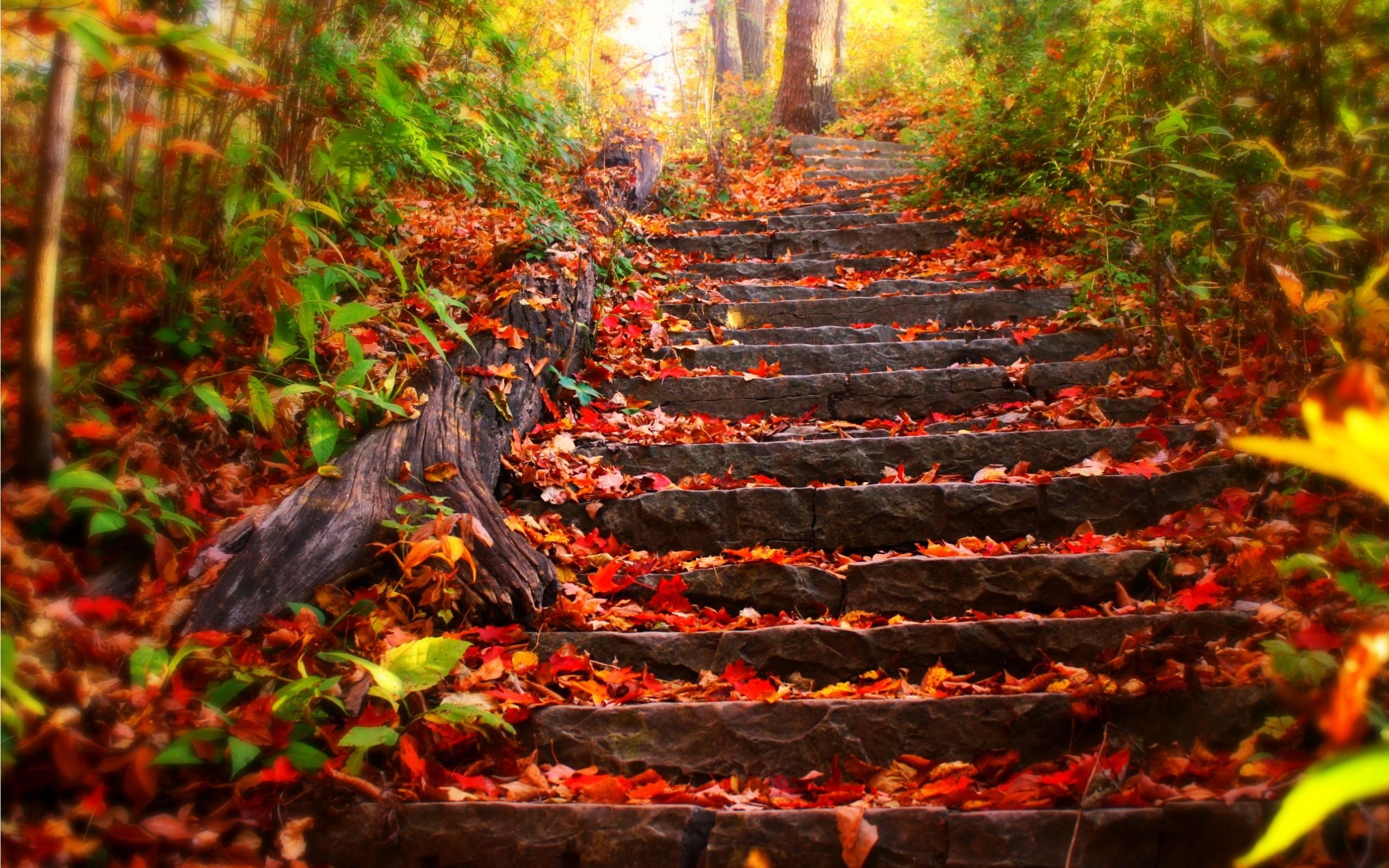 Stairway In Autumn Wallpaper desktop wallpaper, Stairway In Autumn Wallpaper  background, Stairway In Autumn Wallpaper HD wallpaper – image resolution …