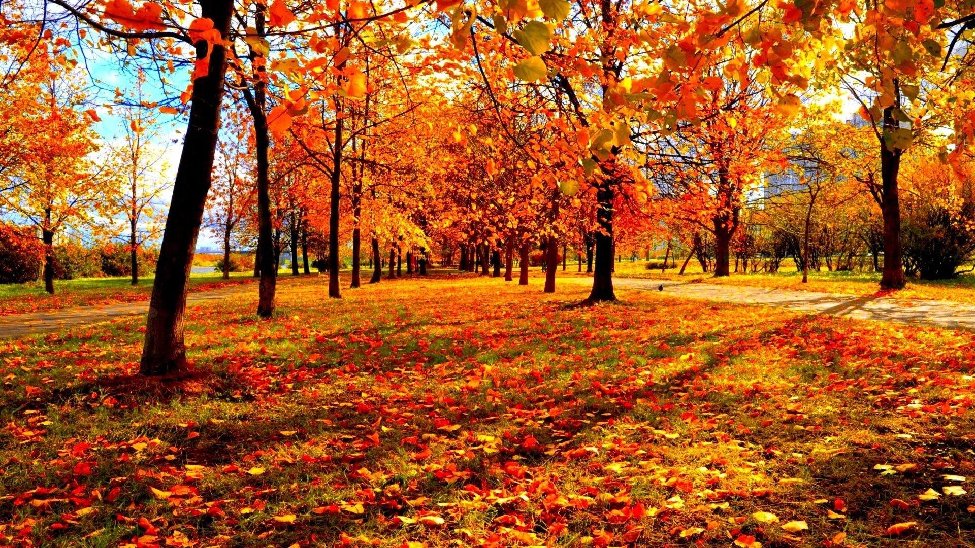 Leaf Tag – Leaves Leaf Fall Seasons Tree Autumn Nature Forest Color Season  Landscape 3d Wallpaper