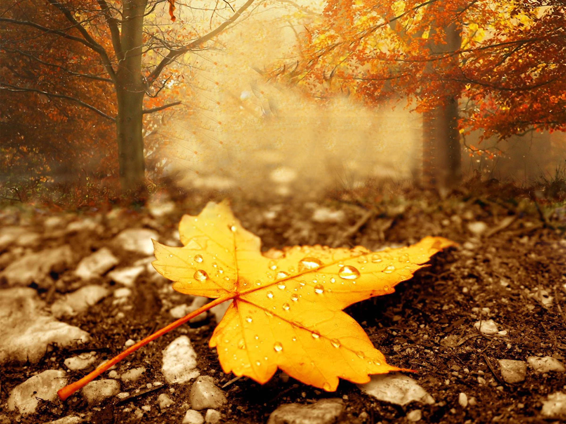 Fall Season Wallpapers High Definition with Wallpaper High Resolution  px 5.95 MB