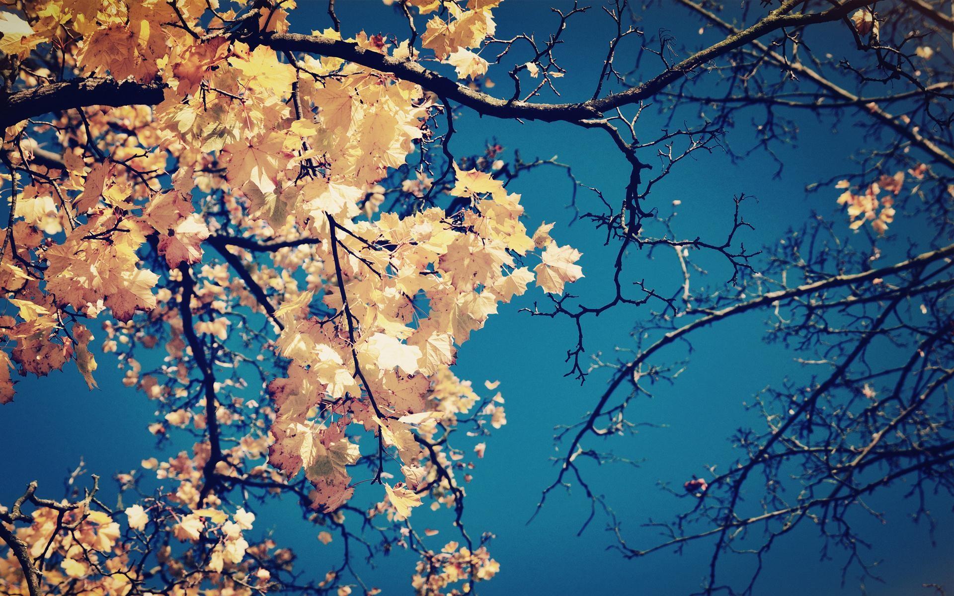 fall season wallpapers