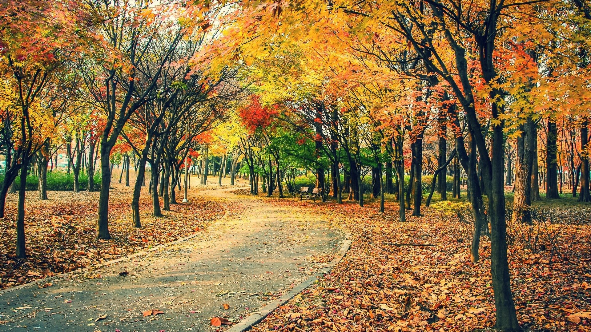 Autumn Tag – Nature Leaves Trail Tree Path Leaf Forest Landscape Fall Autumn  Road Wallpapers For