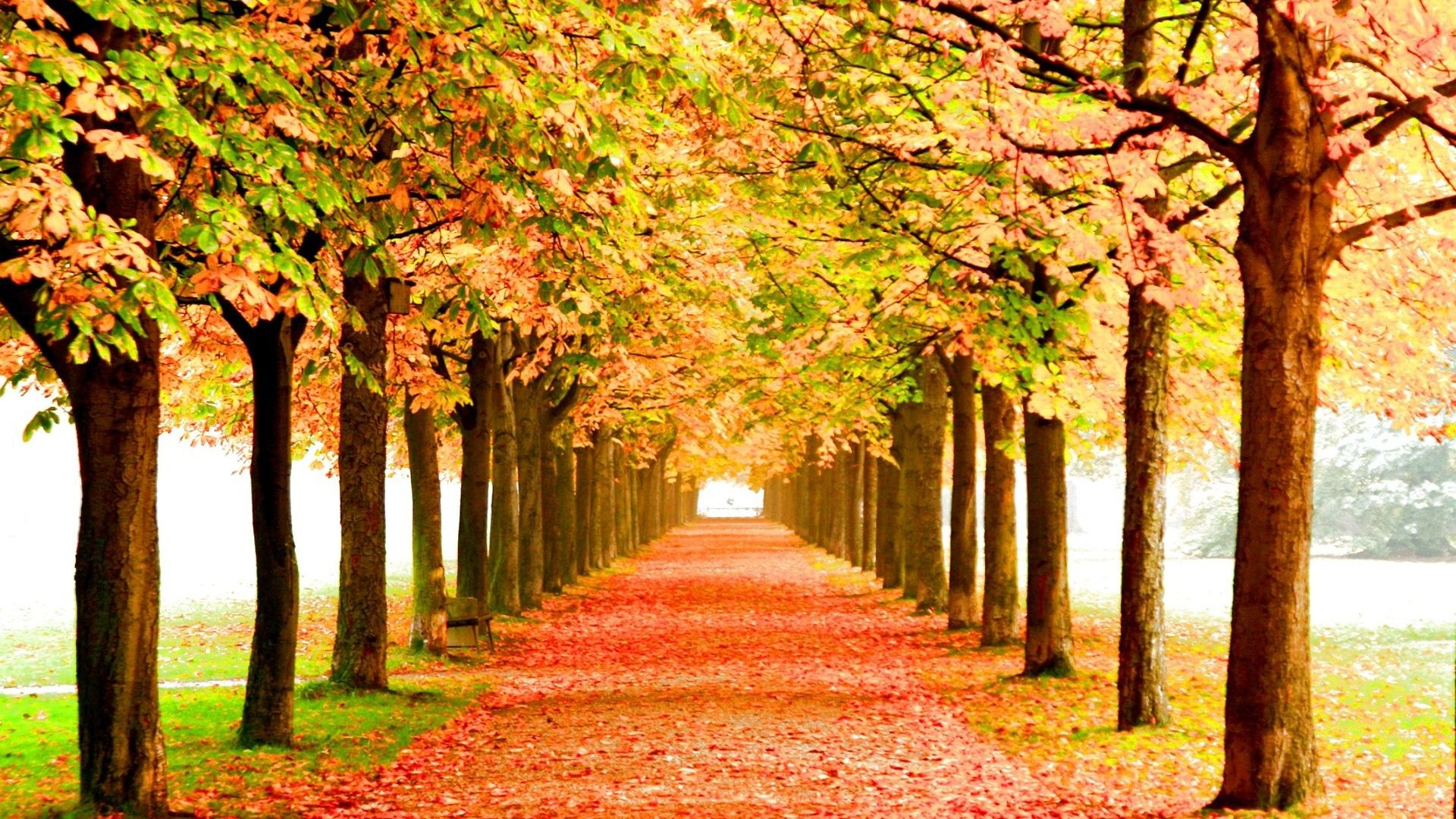 Leaves – Season Leaf Forest Leaves Color Autumn Nature Tree Landscape Fall  Seasons Wallpaper Gallery for