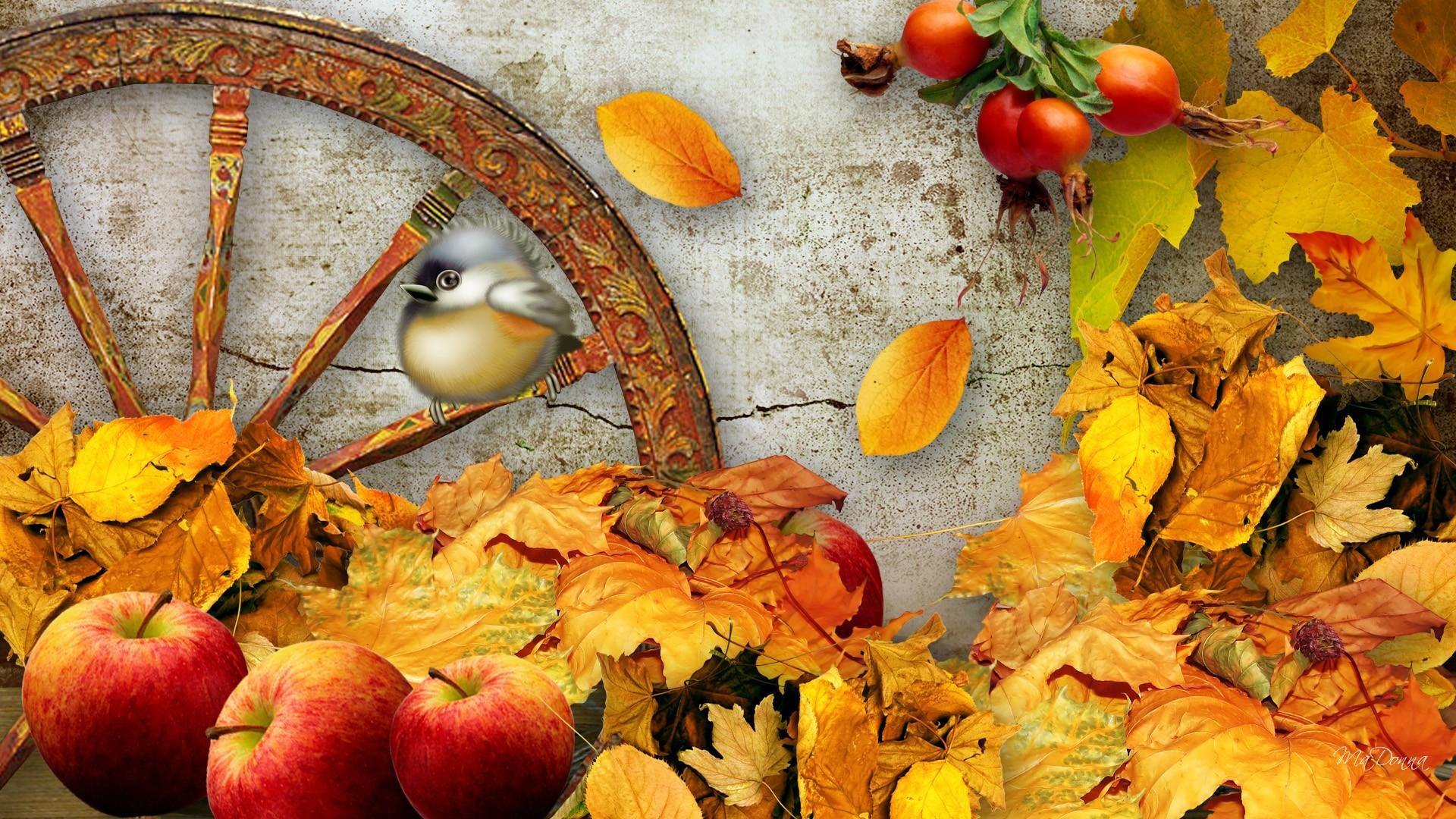 Fall Harvest Wallpaper Mobile