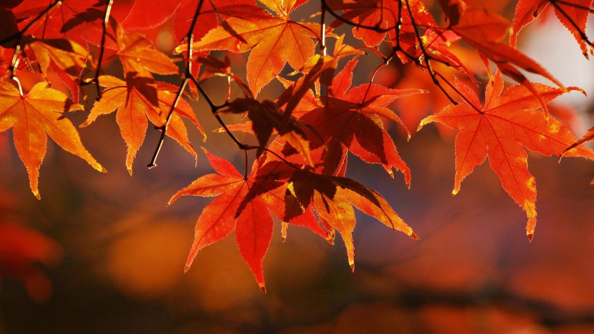 Leaves Tag – Fall Leaves Season Autumn Colors Tree Free Desktop Wallpaper  for HD 16: