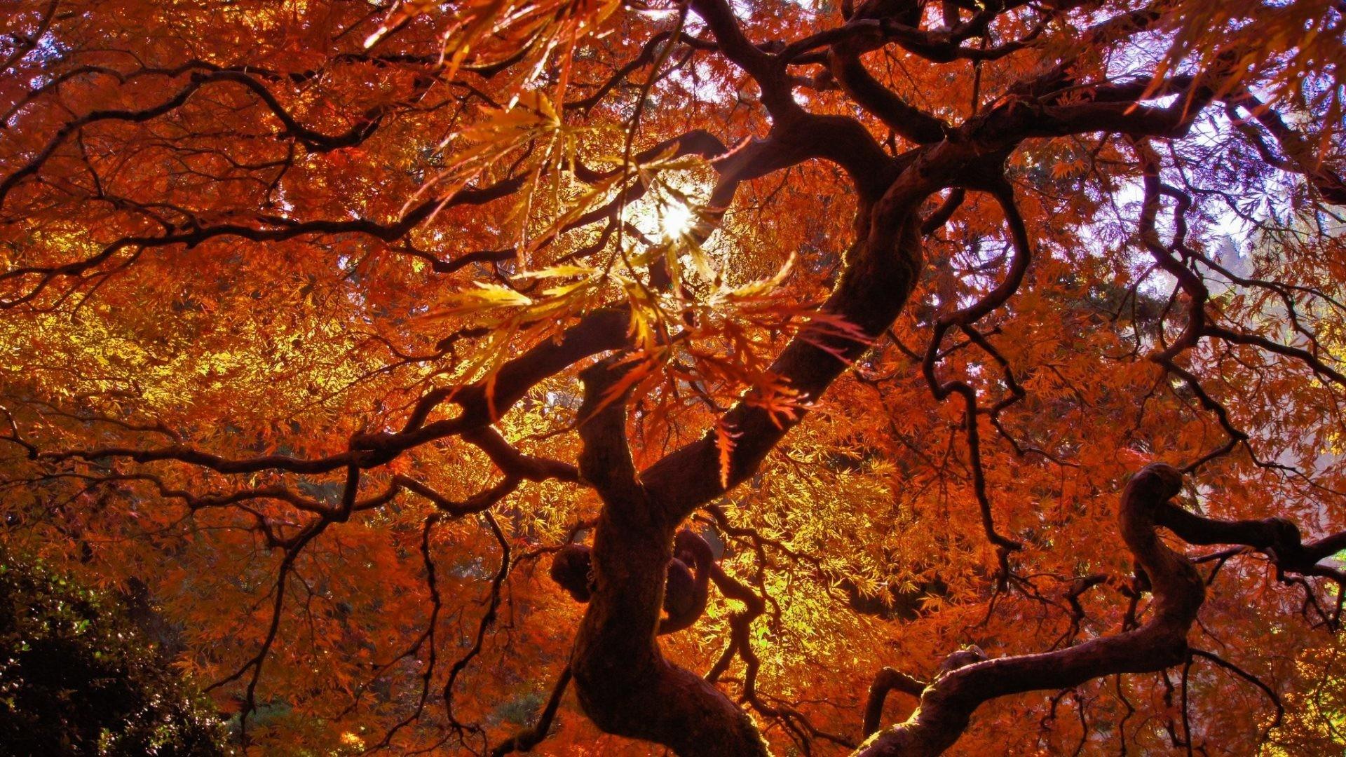 Automne Tag – Automne Nature Leaf Rain Tree Landscapes Fall Wet Season  Campaign Wallpaper Image Hd