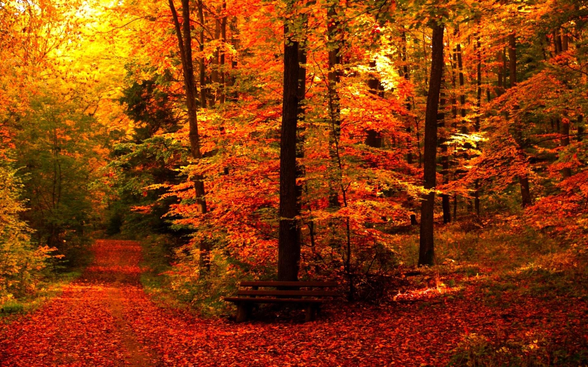 Autumn fall season nature landscape leaf leaves color seasons tree forest  wallpaper     945301   WallpaperUP