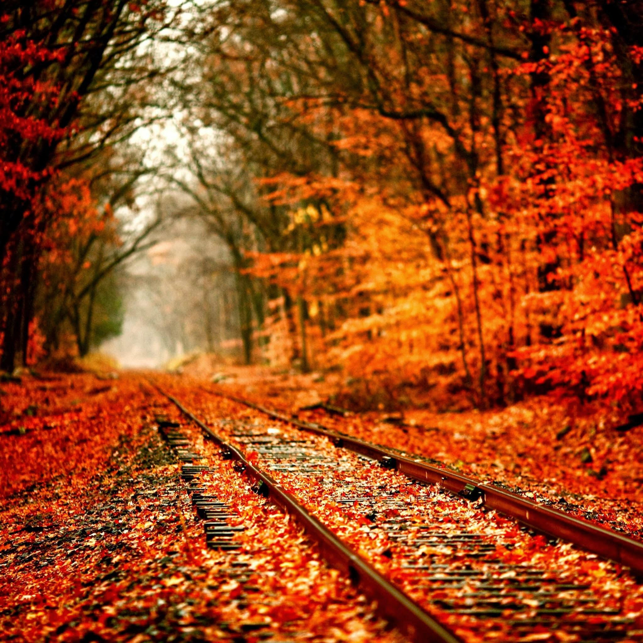 Autumn Railway Covered With Orange Maple Leves iPad Air Wallpaper