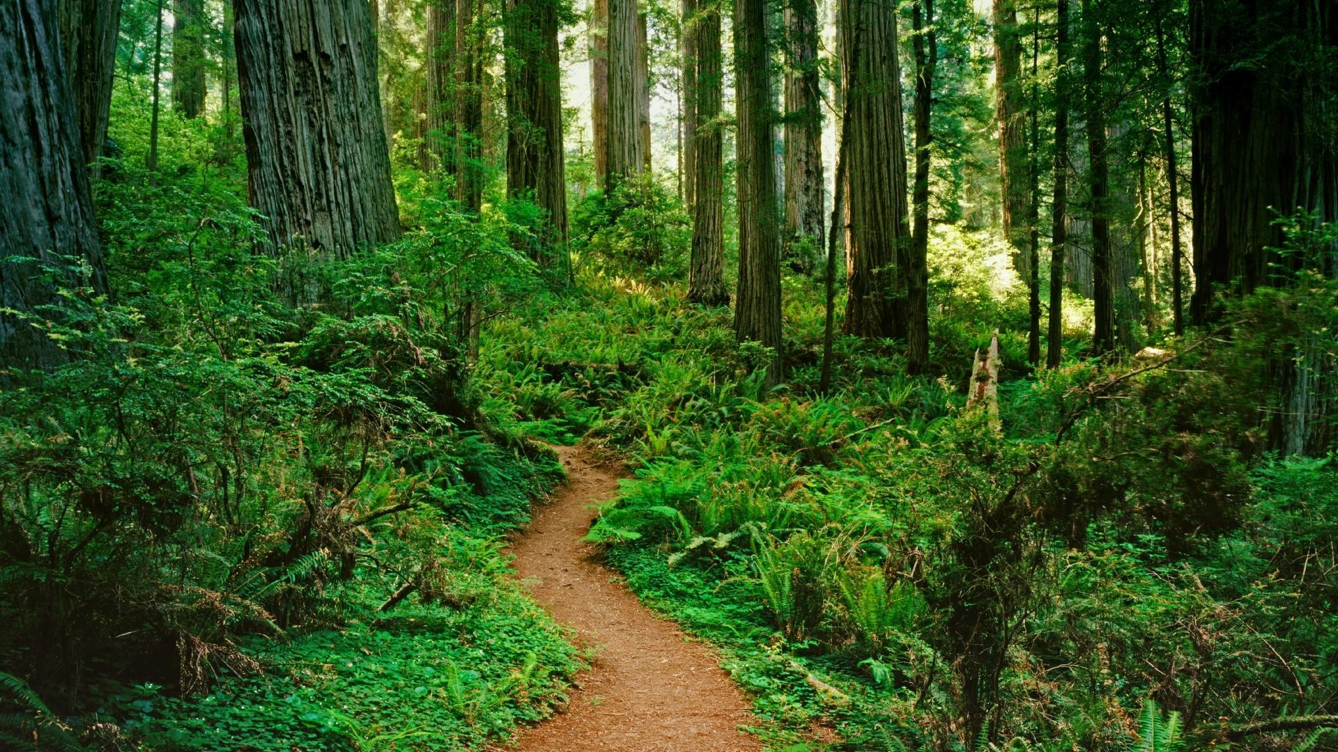 Forest Path Wallpaper