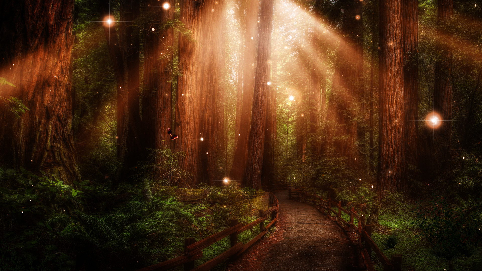 Stunning Forest Path Wallpaper