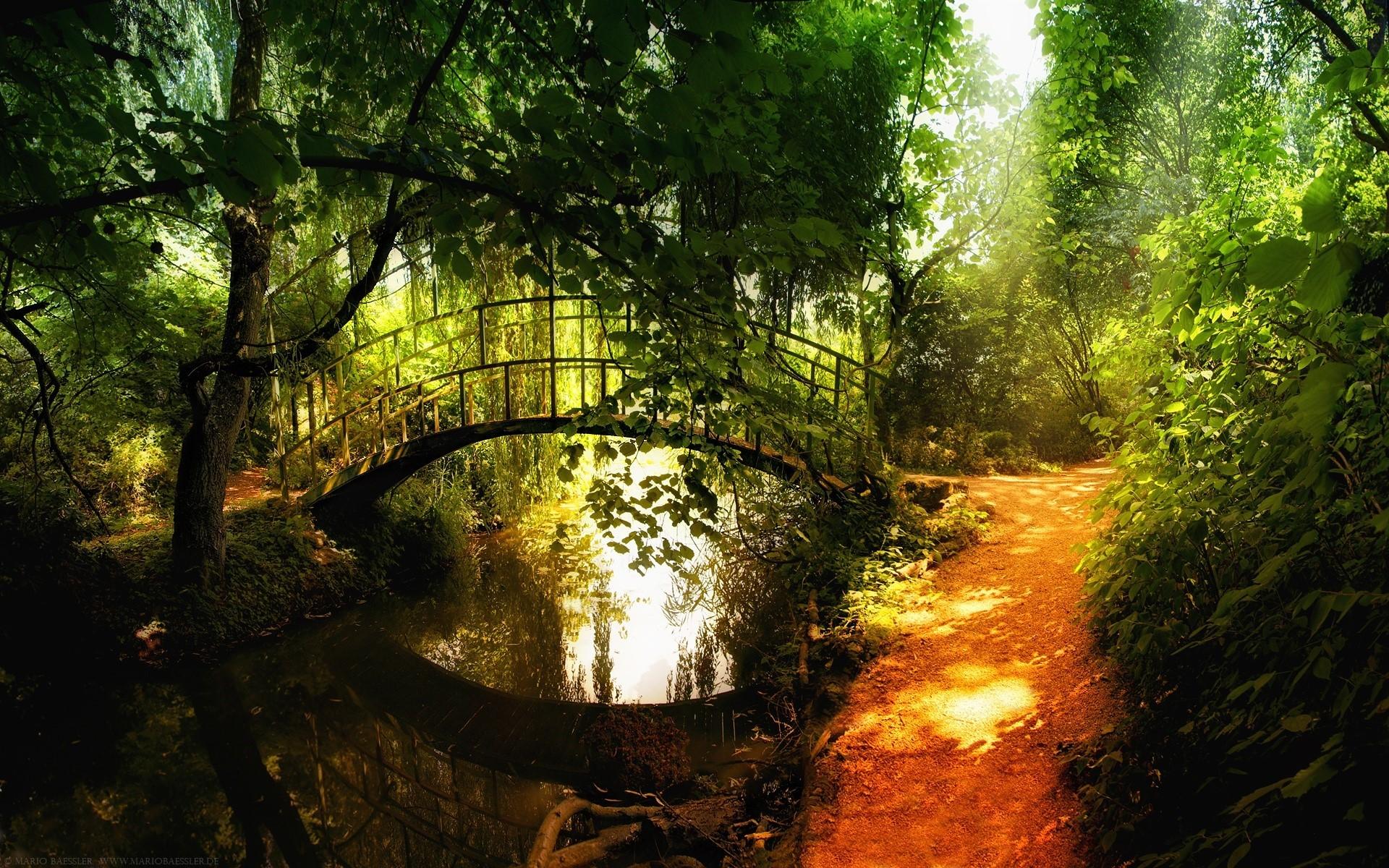 Forest path bridge