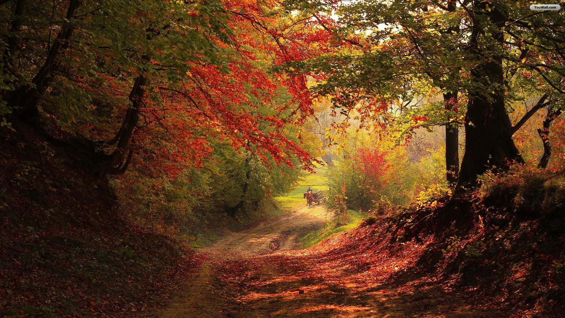 Autumn Forest Path Wallpaper