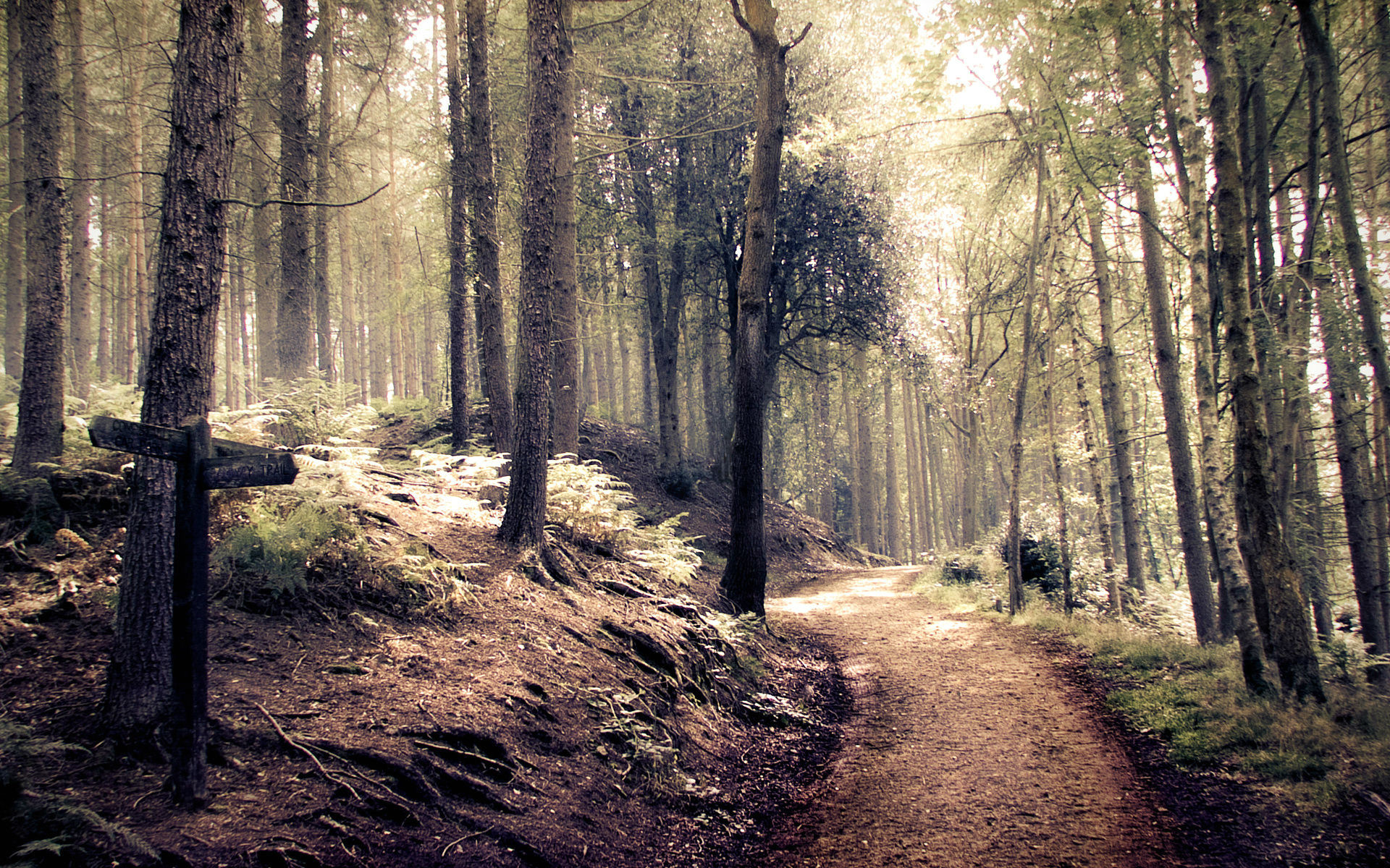 Forest Path HD