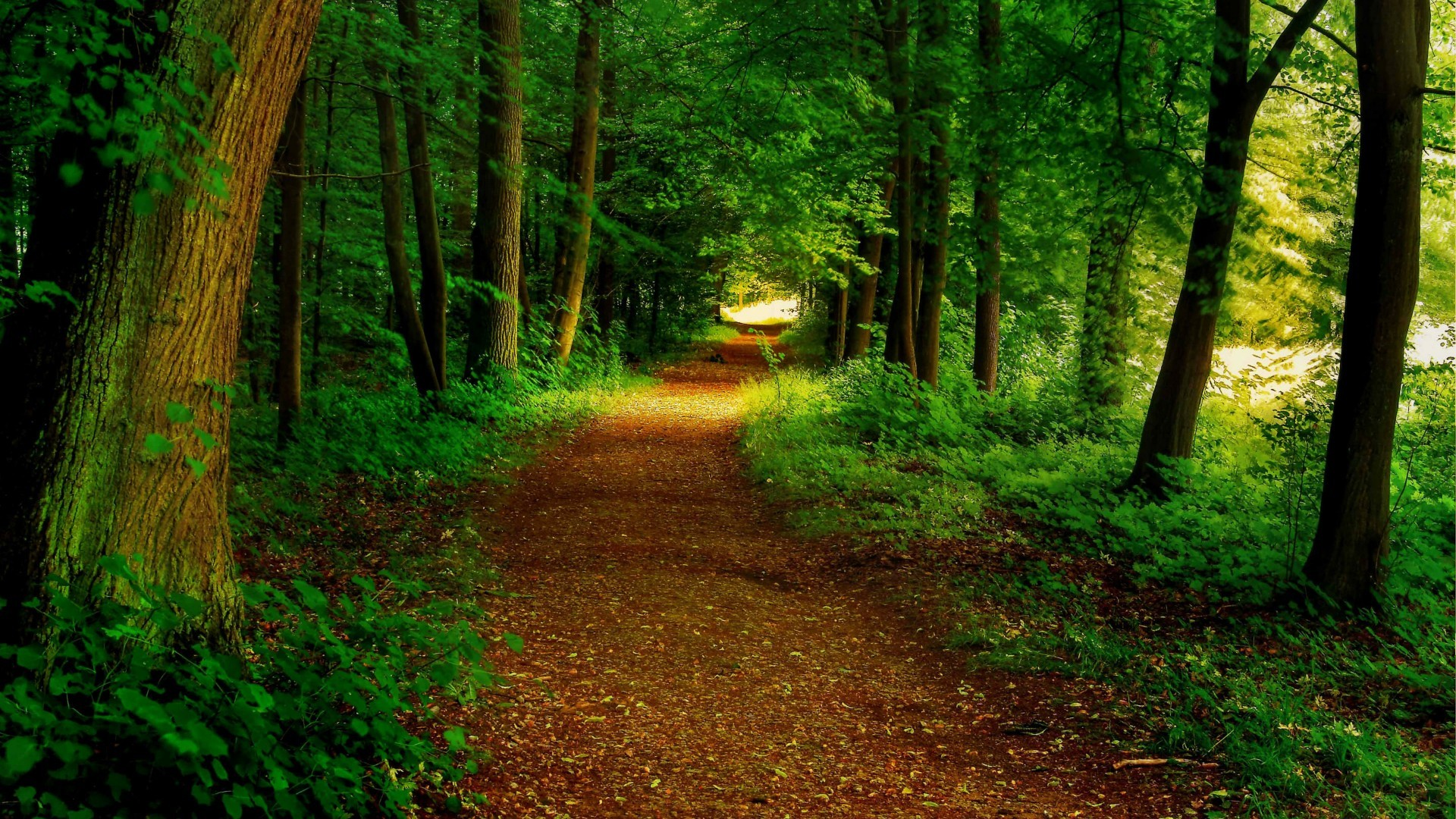Title. Forest path