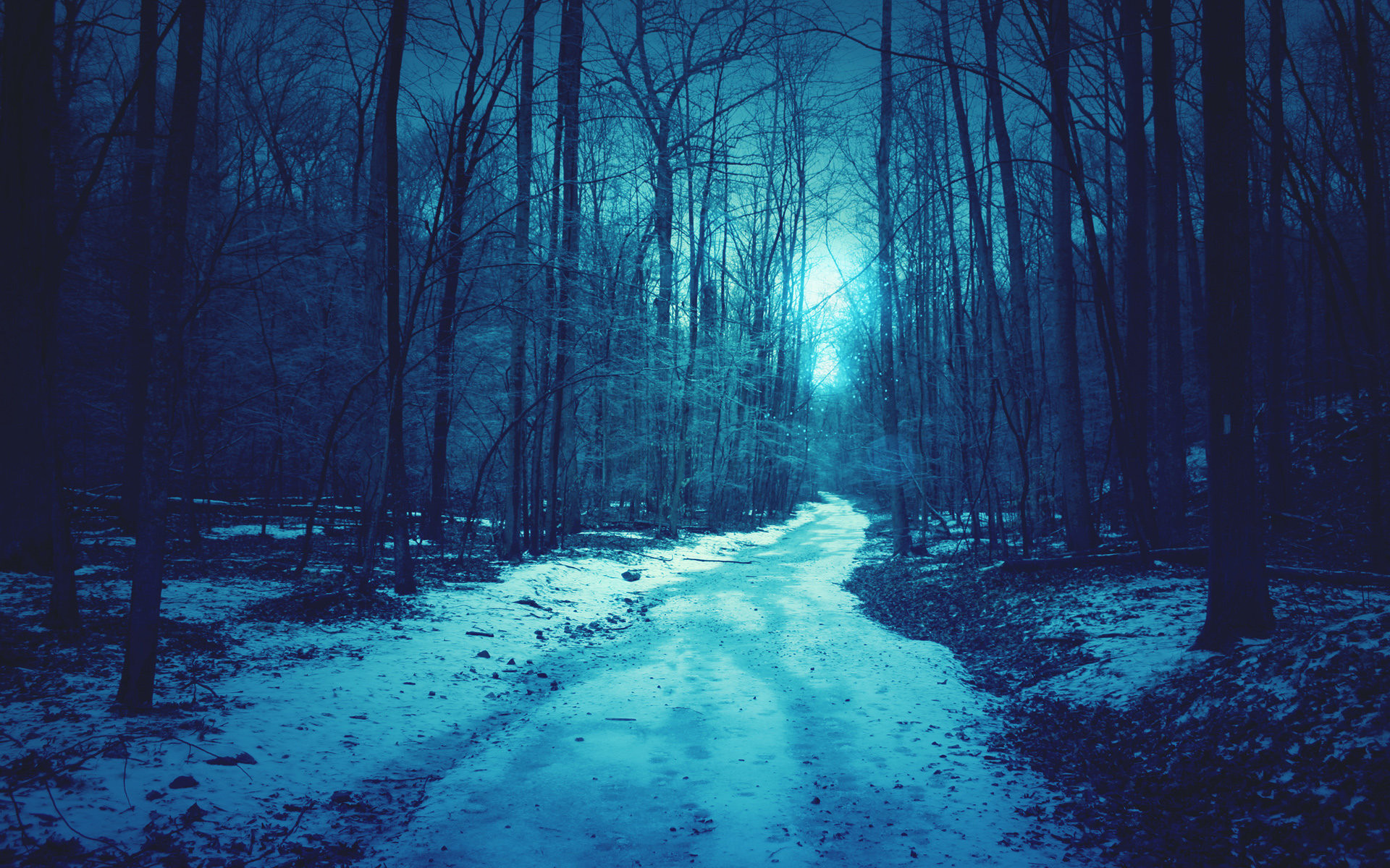Download: Forest Path HD Wallpaper