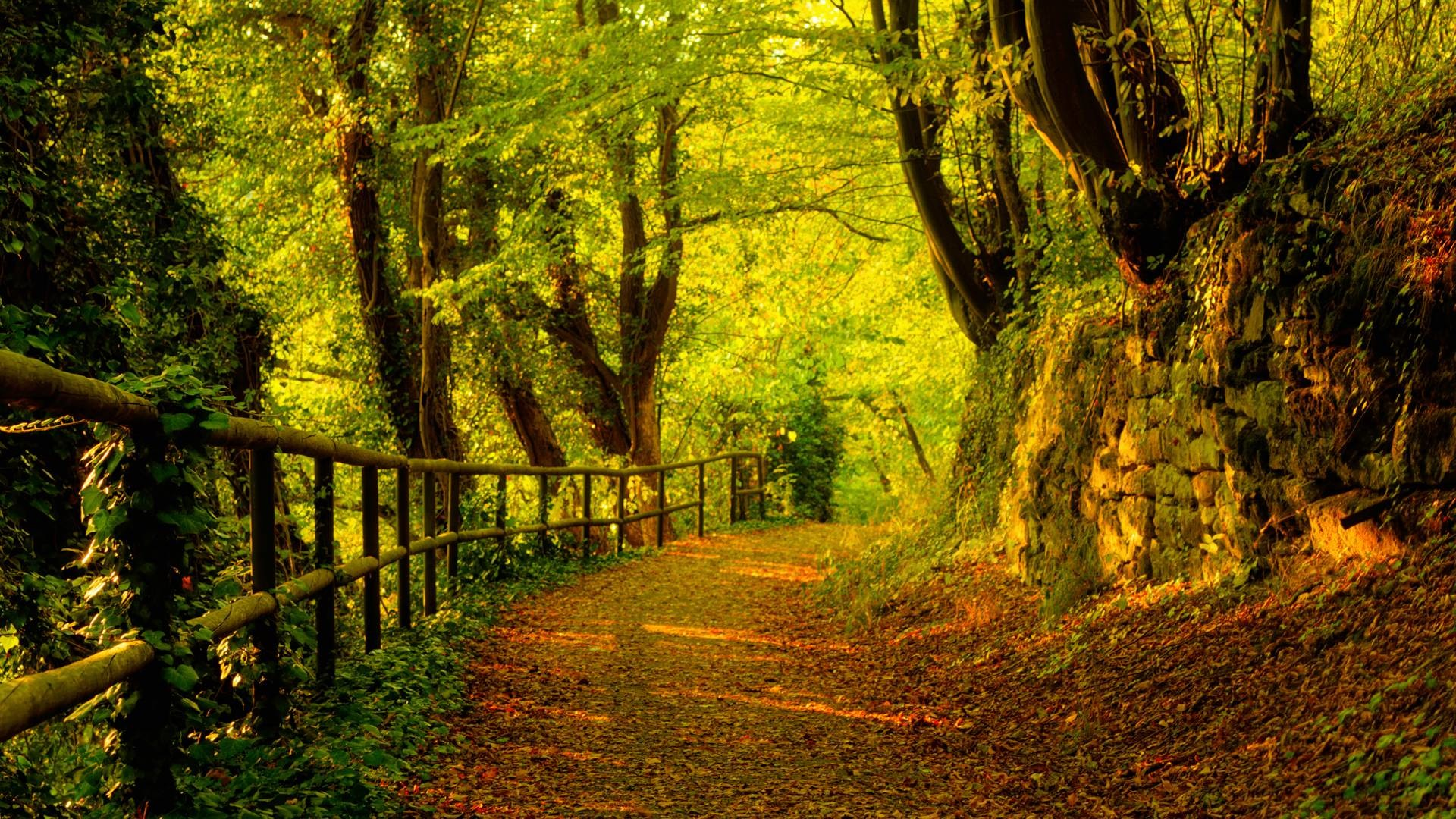 Trees-Autumn-season-Forest-Path-Fresh-New-Hd-