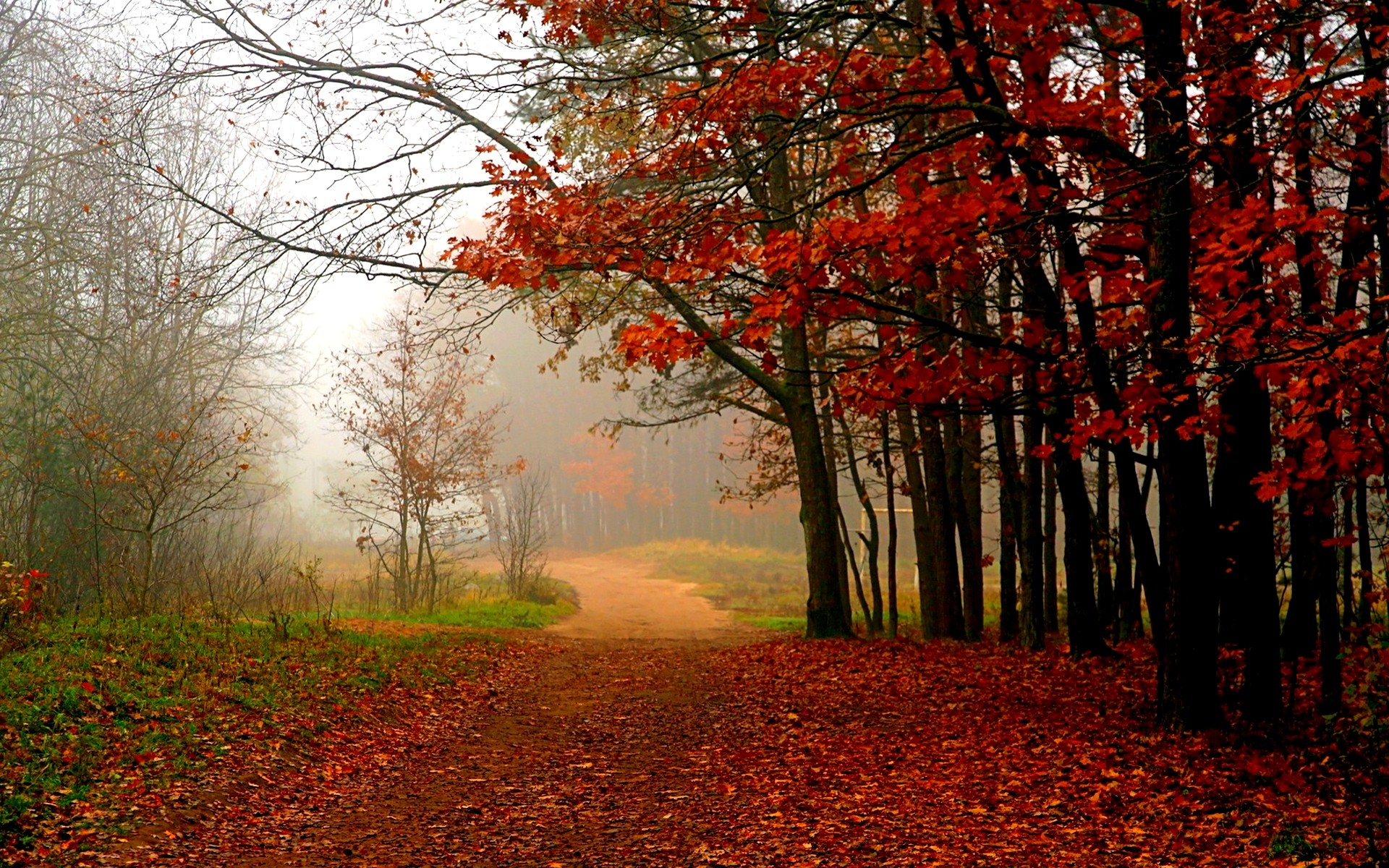 Forest Path Wallpapers 32586