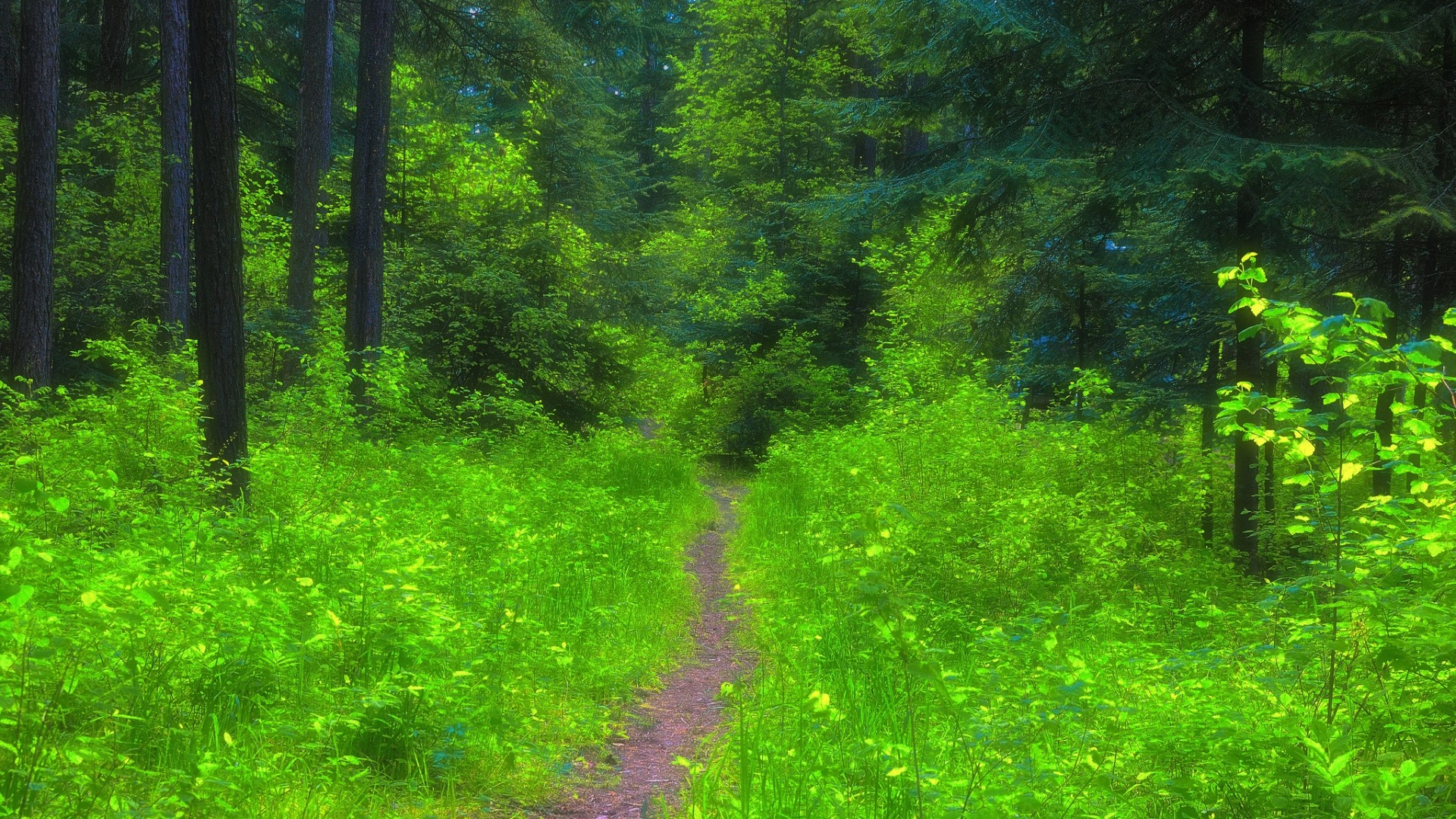 Wallpaper forest, path, trees, grass