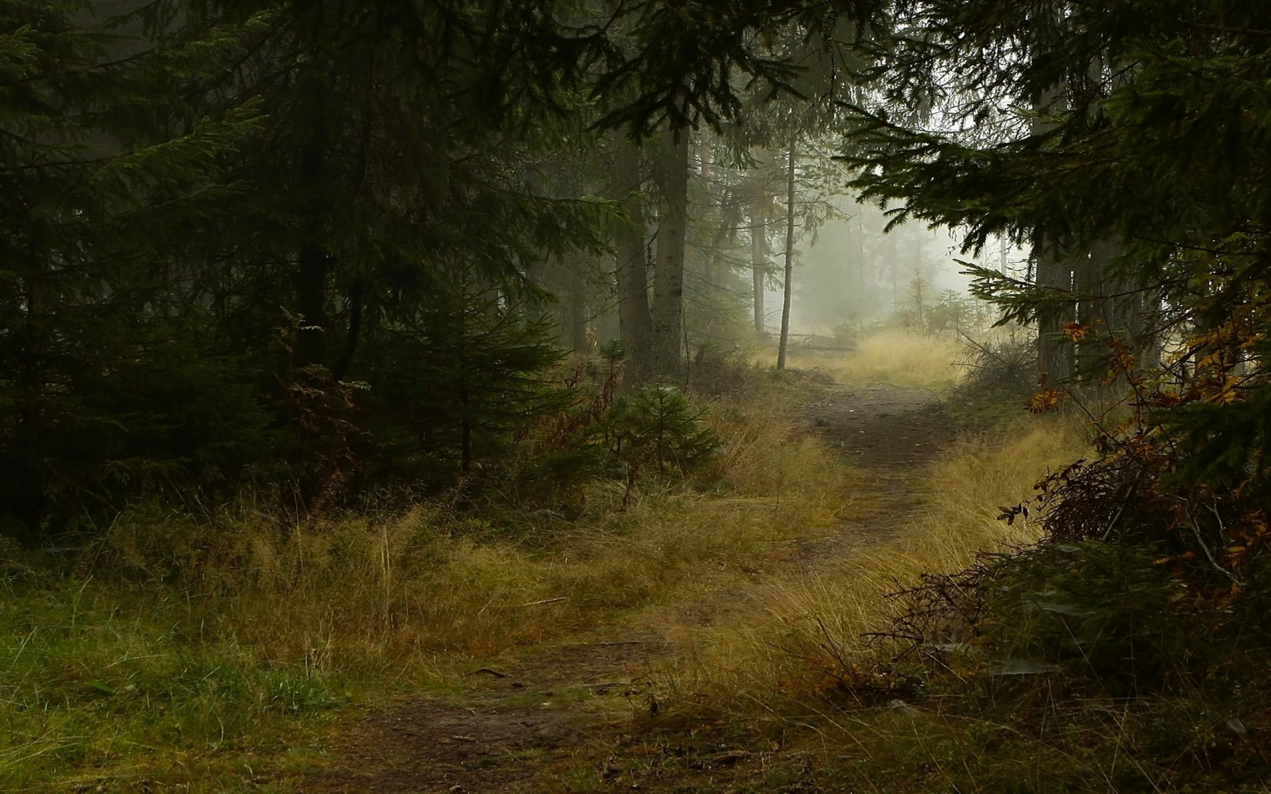Deep Forest Path wallpapers and stock photos