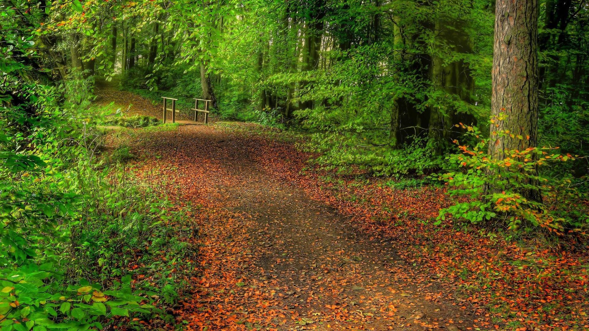 Forest Path Leaves Bridge