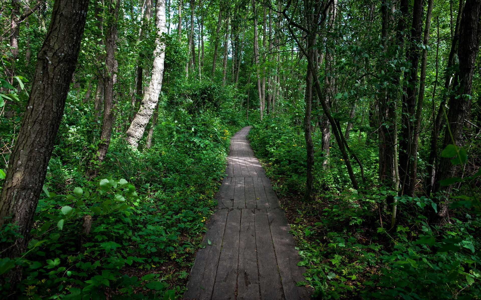 Cool wallpaper of forest, picture of path, nature .