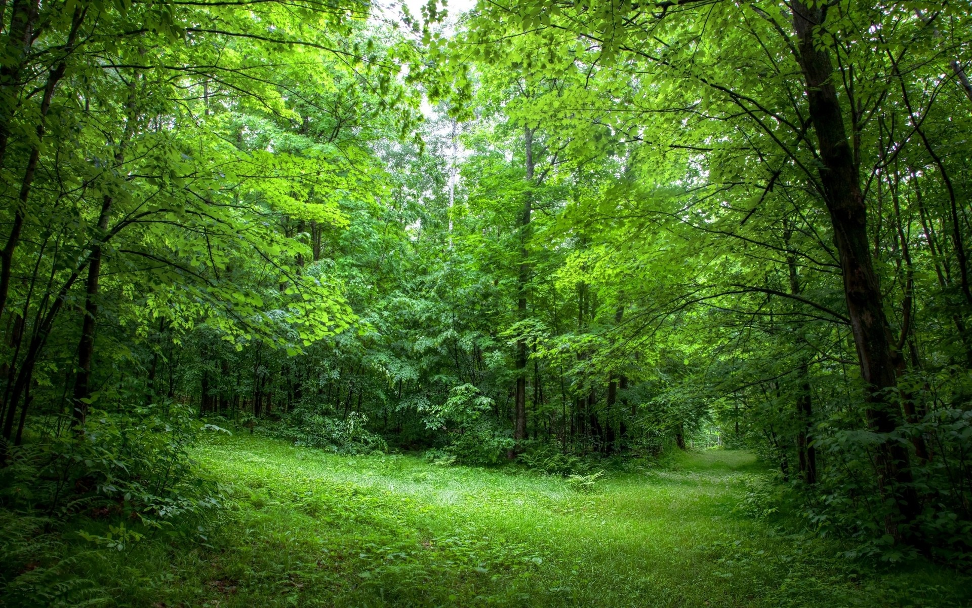 Lush Green Forest Path Sunny wallpapers and stock photos