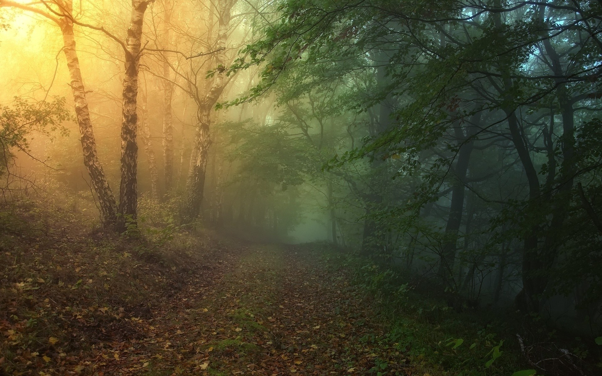 Magical Forest Path wallpapers and stock photos
