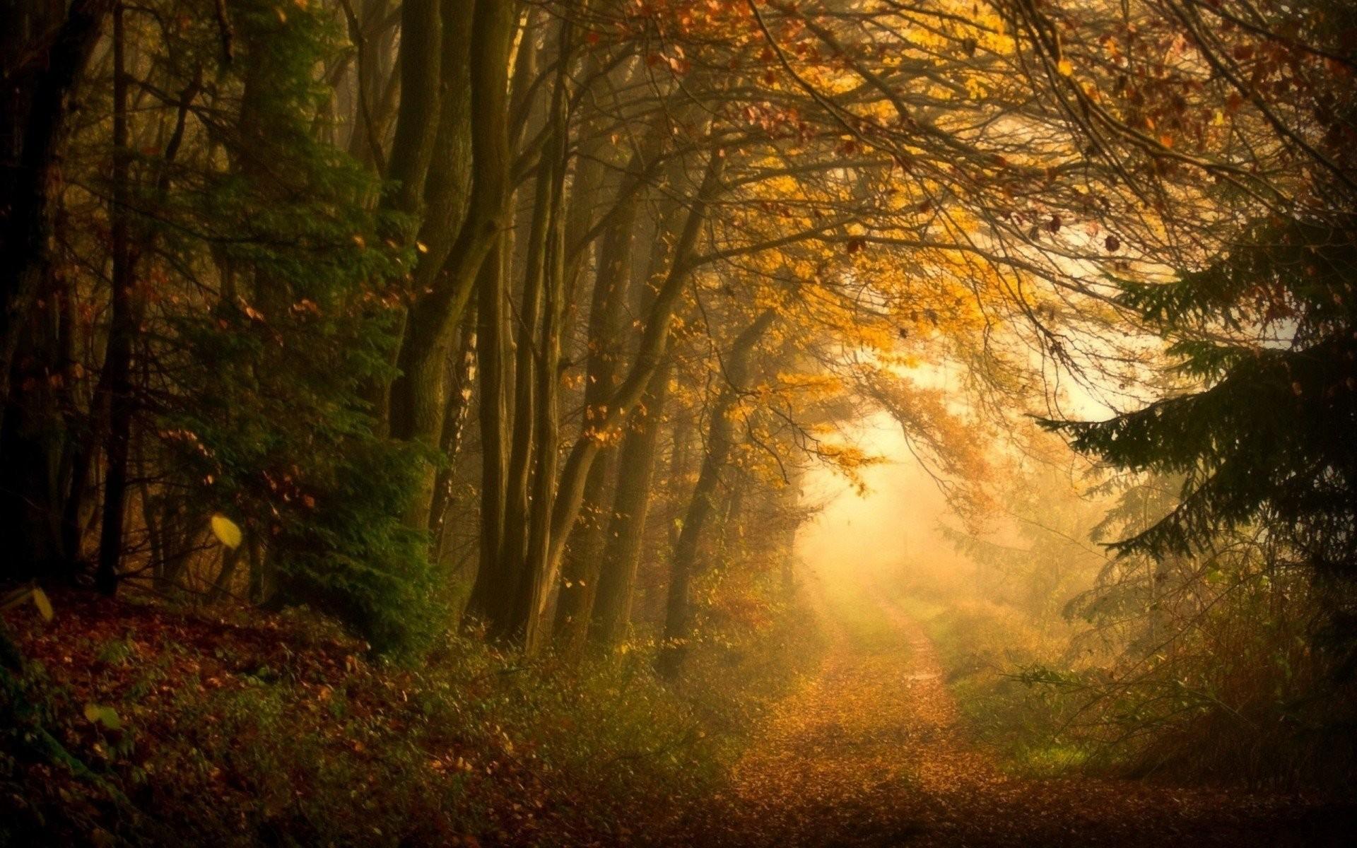 forest path landscape