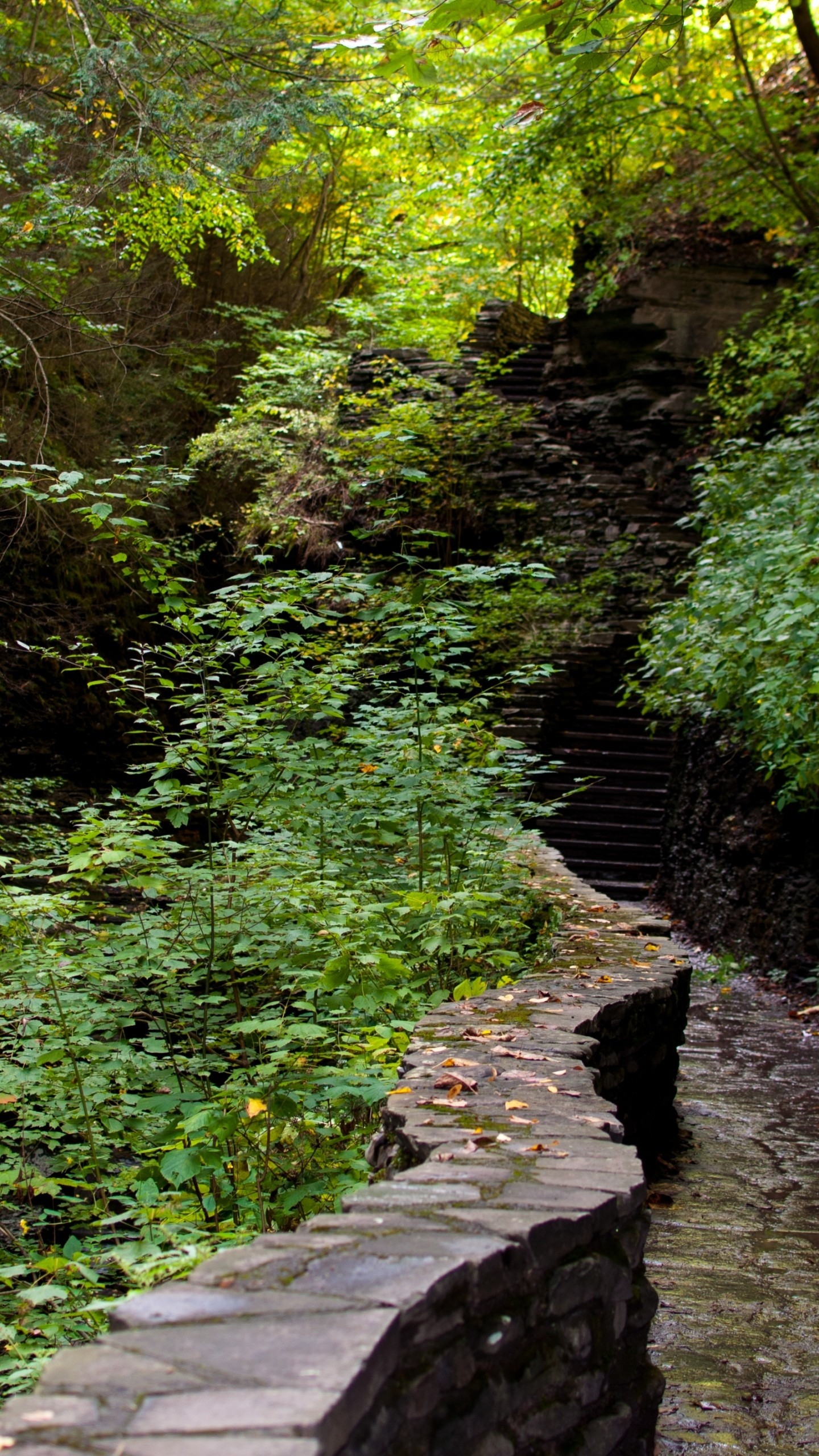 Wallpaper forest, path, steps, nature