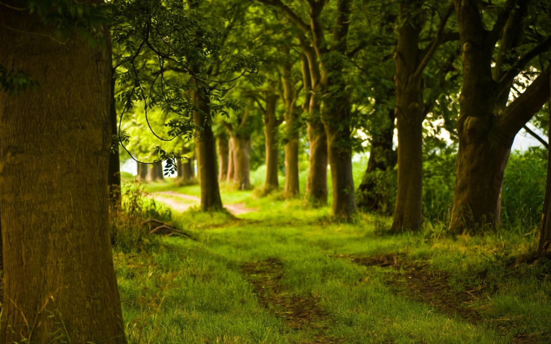 Summer Green Forest Path Wallpaper 7465
