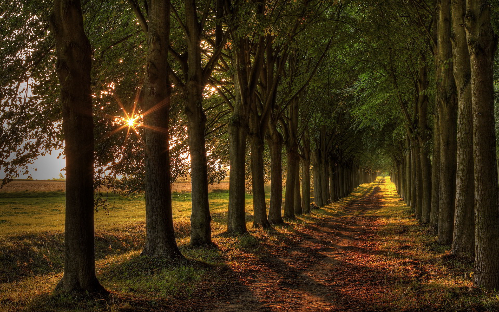 Related Wallpapers from Free Forest Path Wallpaper. Trees Road Sunset