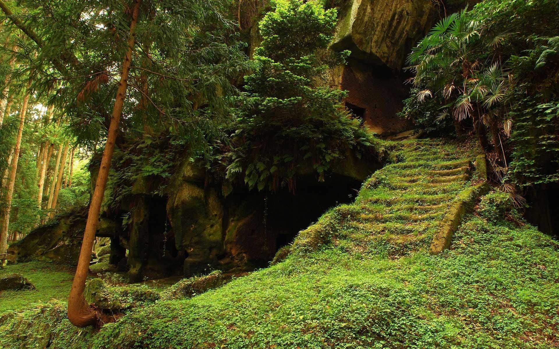 forest path wallpaper hd. Â«Â«