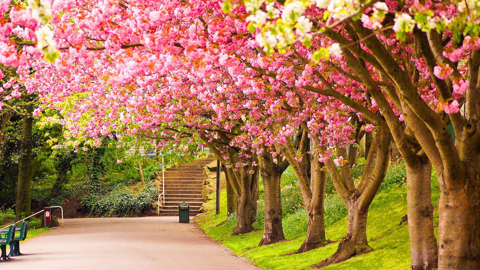 Nature Flower tree wallpaper