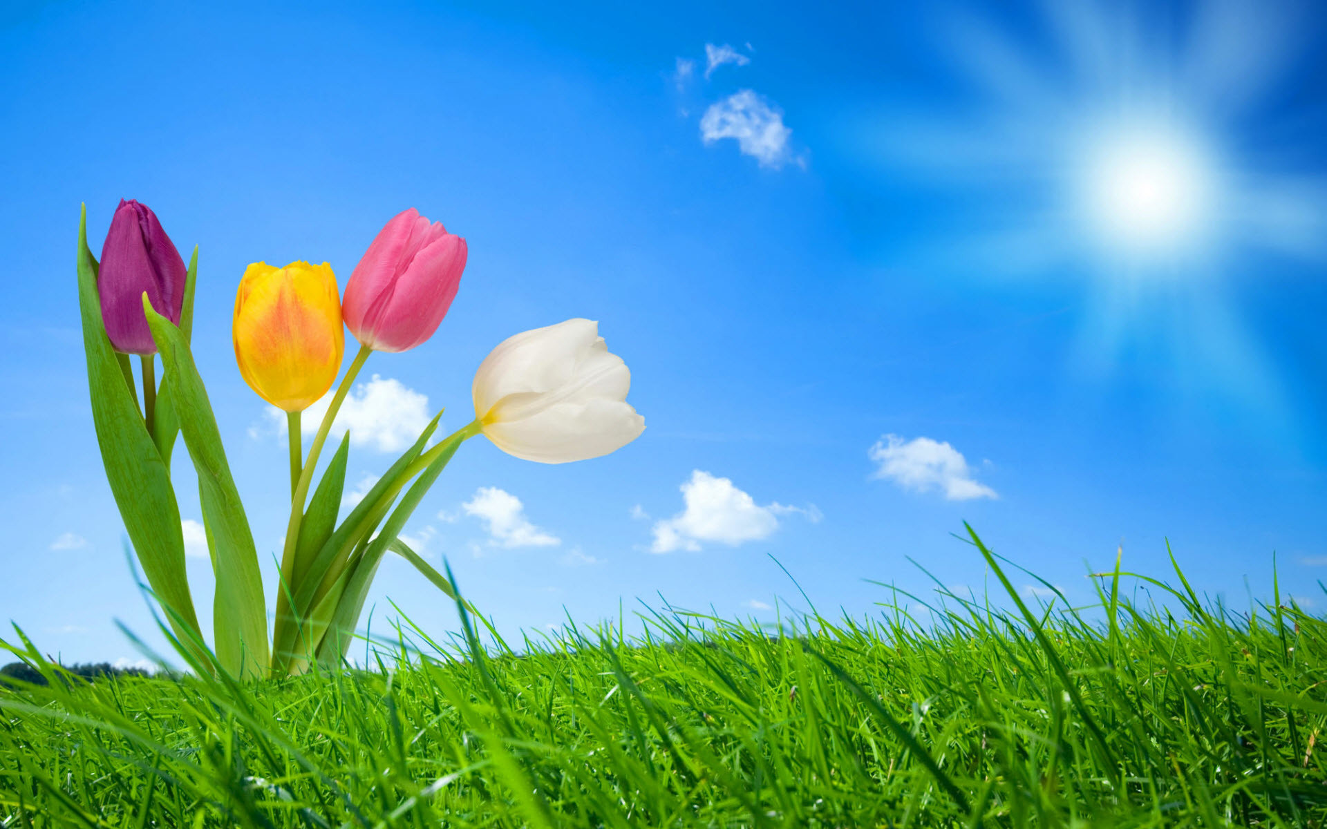Free Spring Wallpaper Backgrounds   2012 Nature Wallpapers. All images are  copyrighted by their .