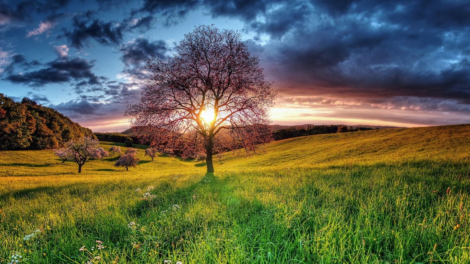 Sunset HD Nature Wallpaper
