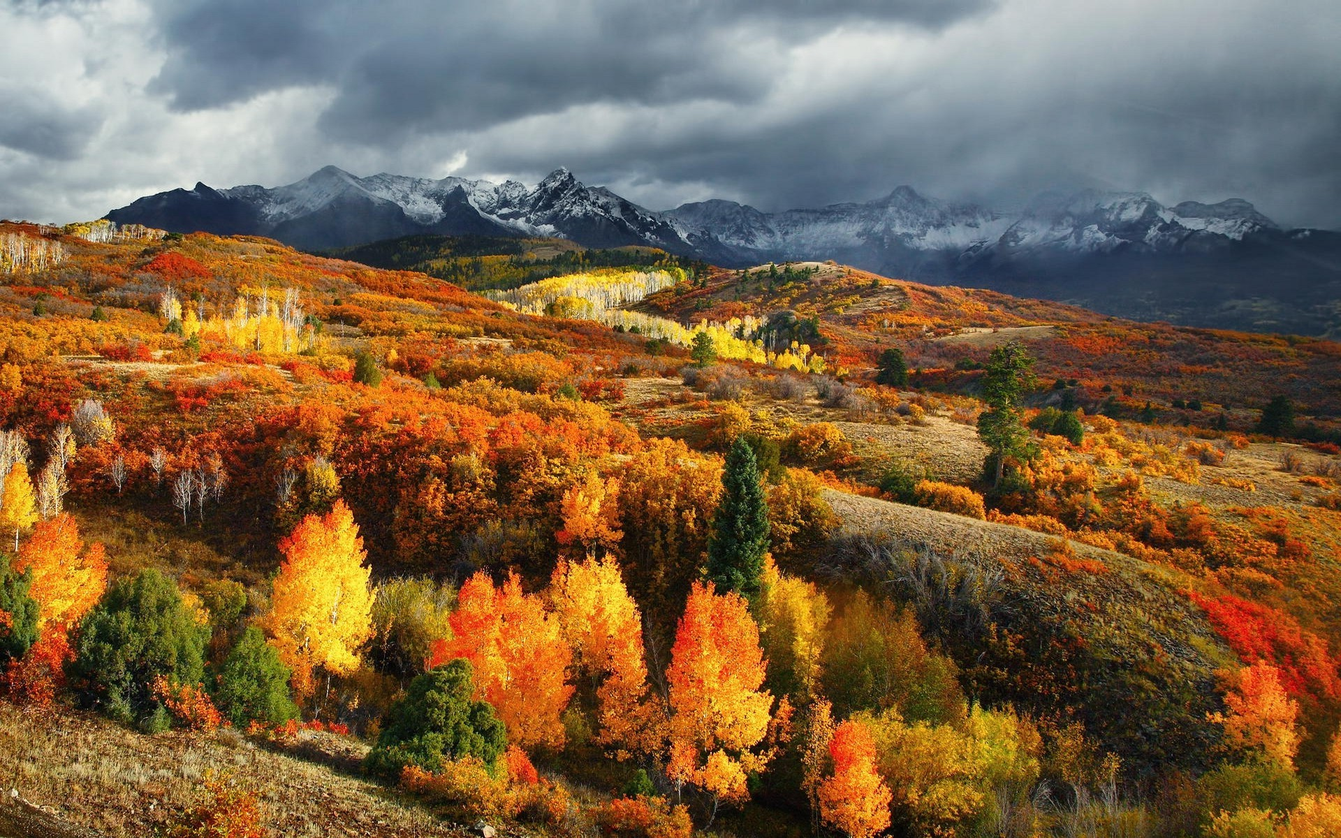 nature, Landscape, Fall, Forest, Mountain, Colorado, Snowy Peak, Clouds,  Colorful Wallpapers HD / Desktop and Mobile Backgrounds