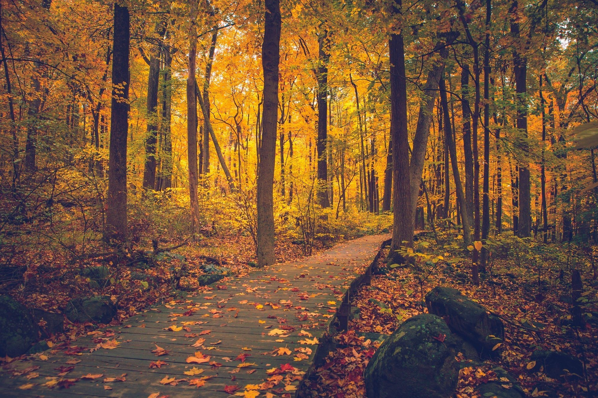 Sourland Mountain, New Jersey, Fall, Trees, Walkway, Nature, Forest  Wallpapers HD / Desktop and Mobile Backgrounds