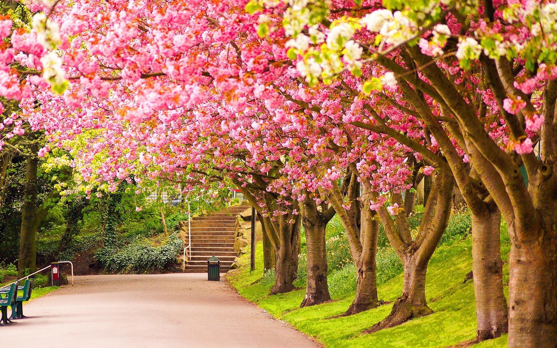 Spring nature desktop wallpaper.