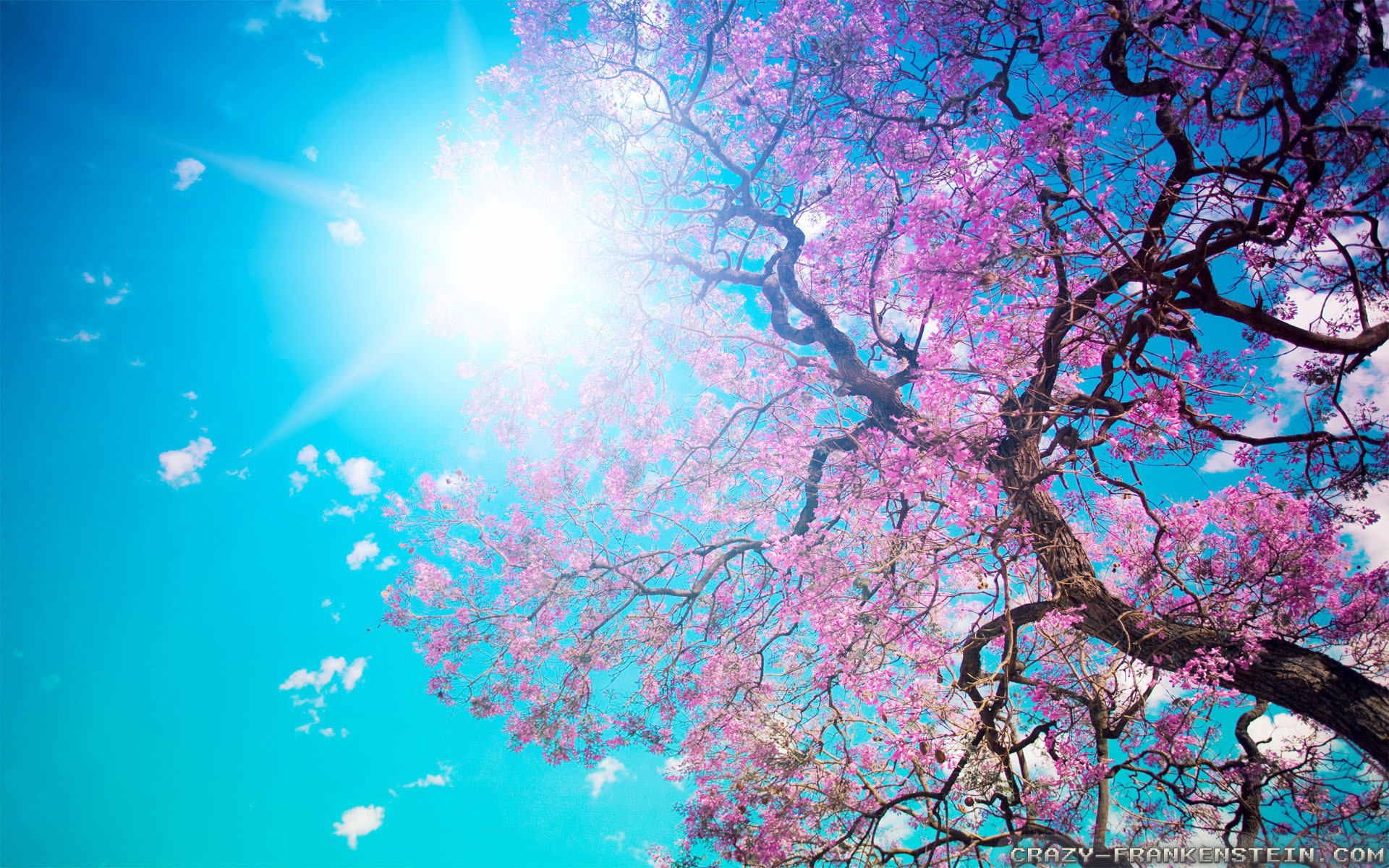 Wallpaper: Beautiful Spring nature wallpapers. Resolution: 1024×768 |  1280×1024 | 1600×1200. Widescreen Res: 1440×900 | 1680×1050 | 1920×1200