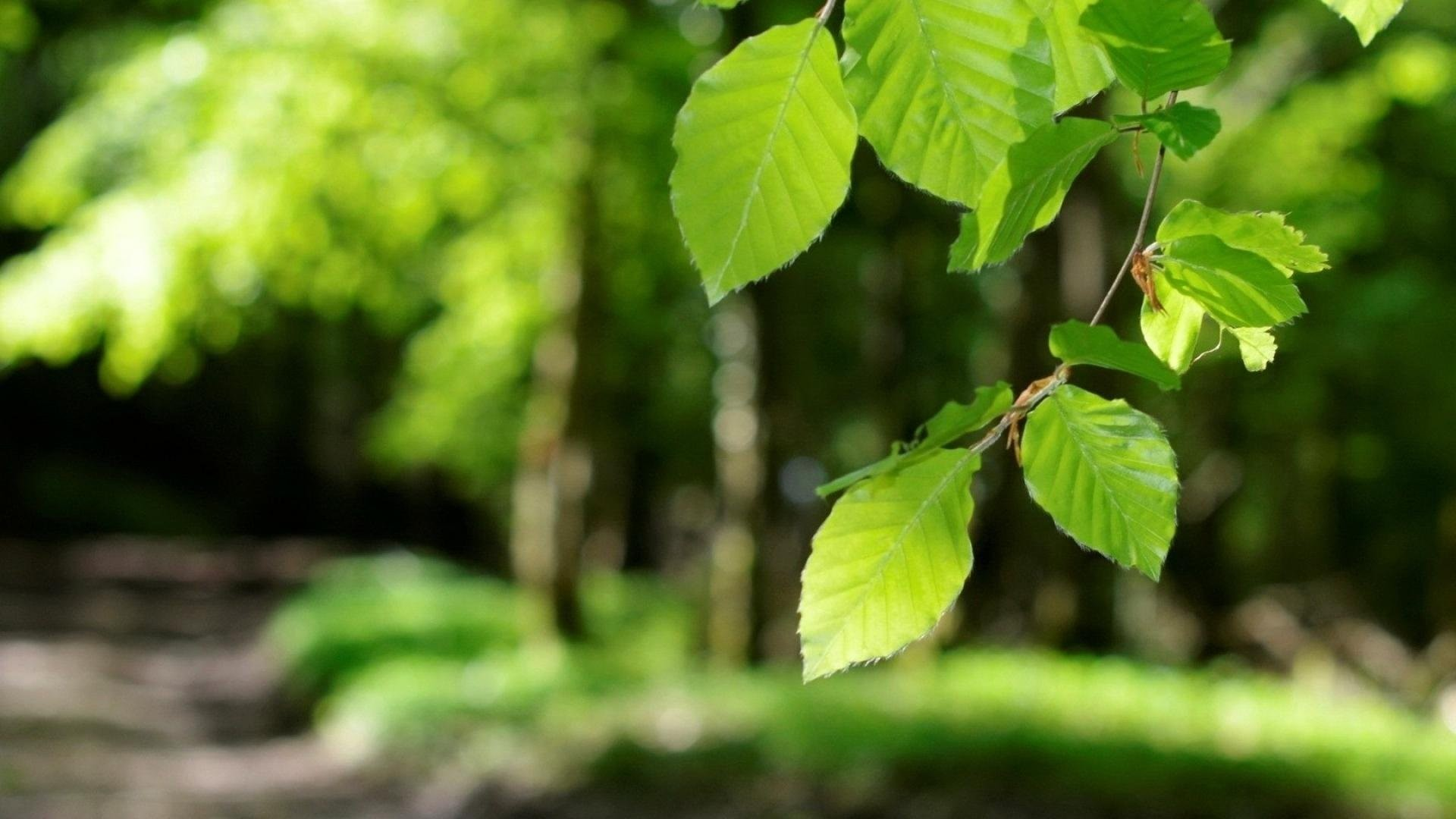 Spring Nature Light Young Leaves Green Landscapess