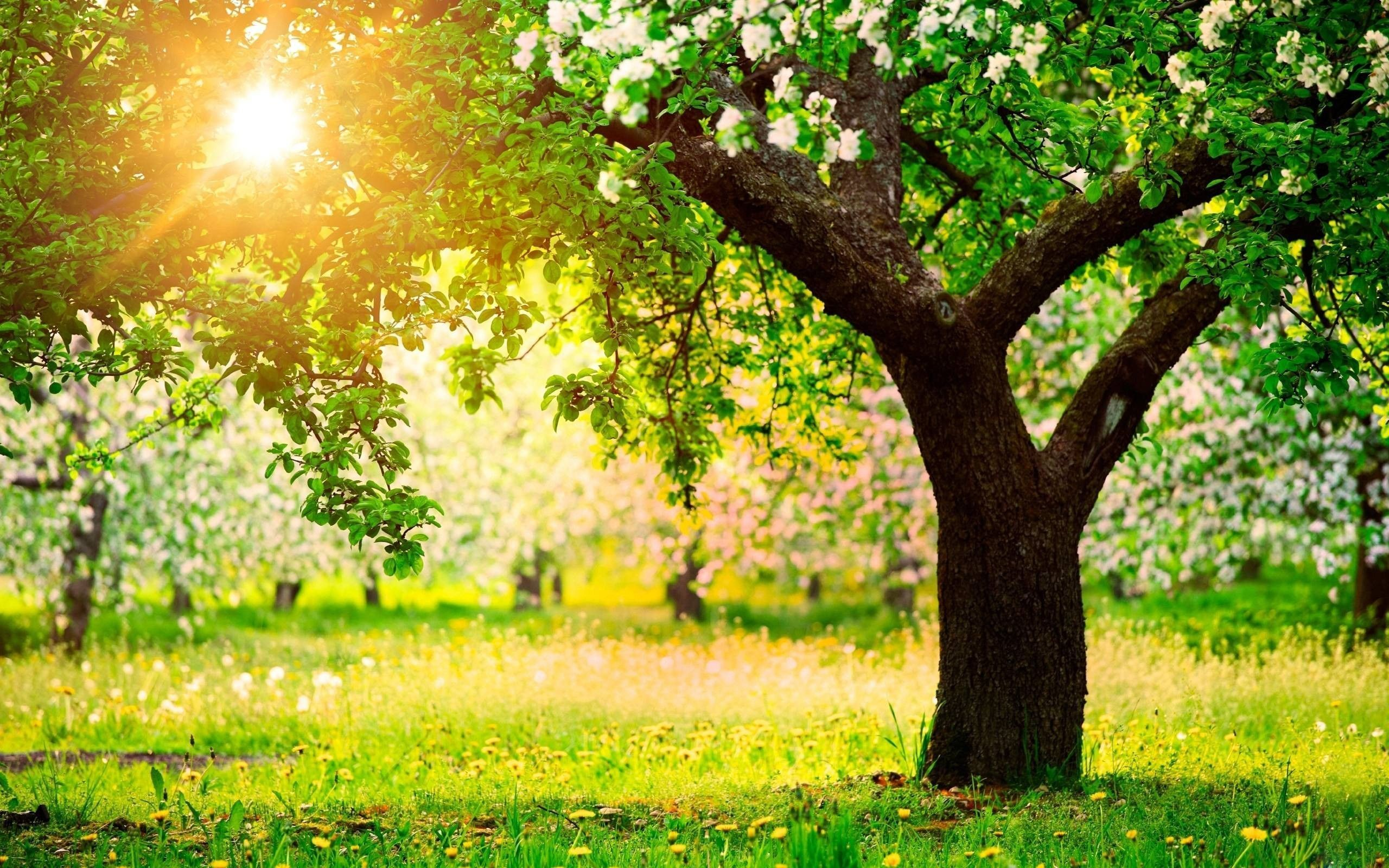 Beautiful Spring Nature HD Wallpapers