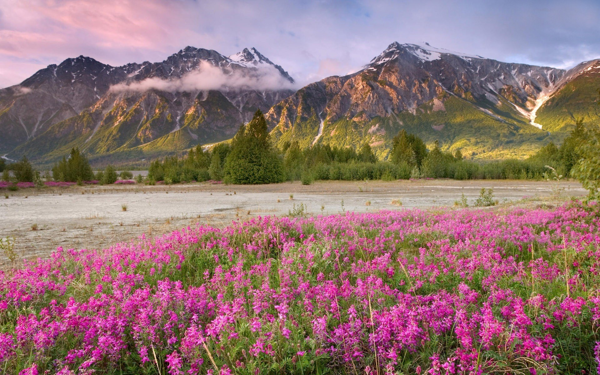 nature spring view wallpaper