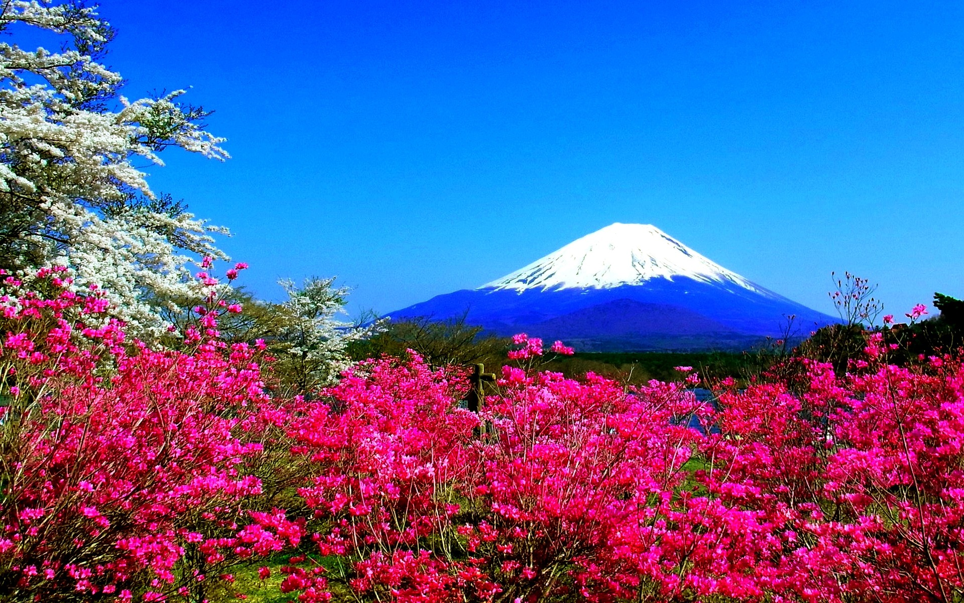 0 Spring Widescreen Wallpapers Group Spring in Japan wallpapers Pixels Talk