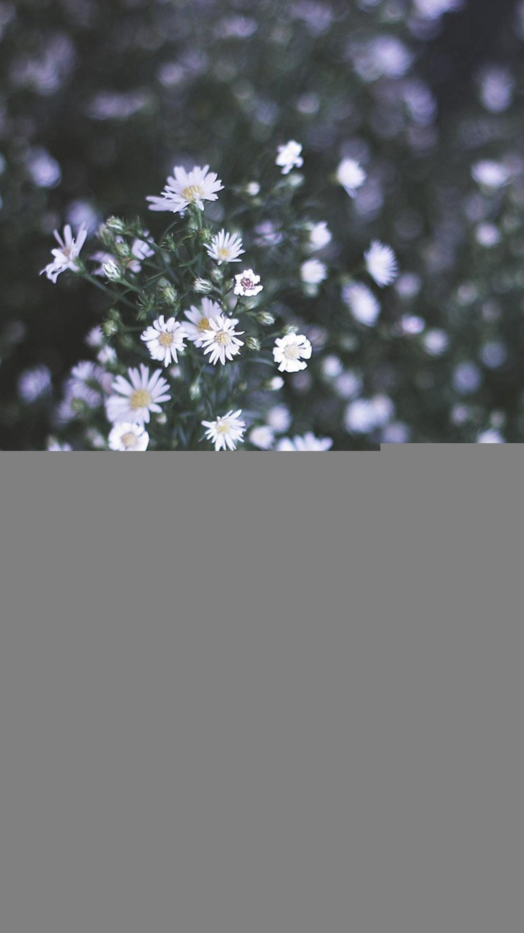 Flower White Spring Nature iPhone 8 wallpaper